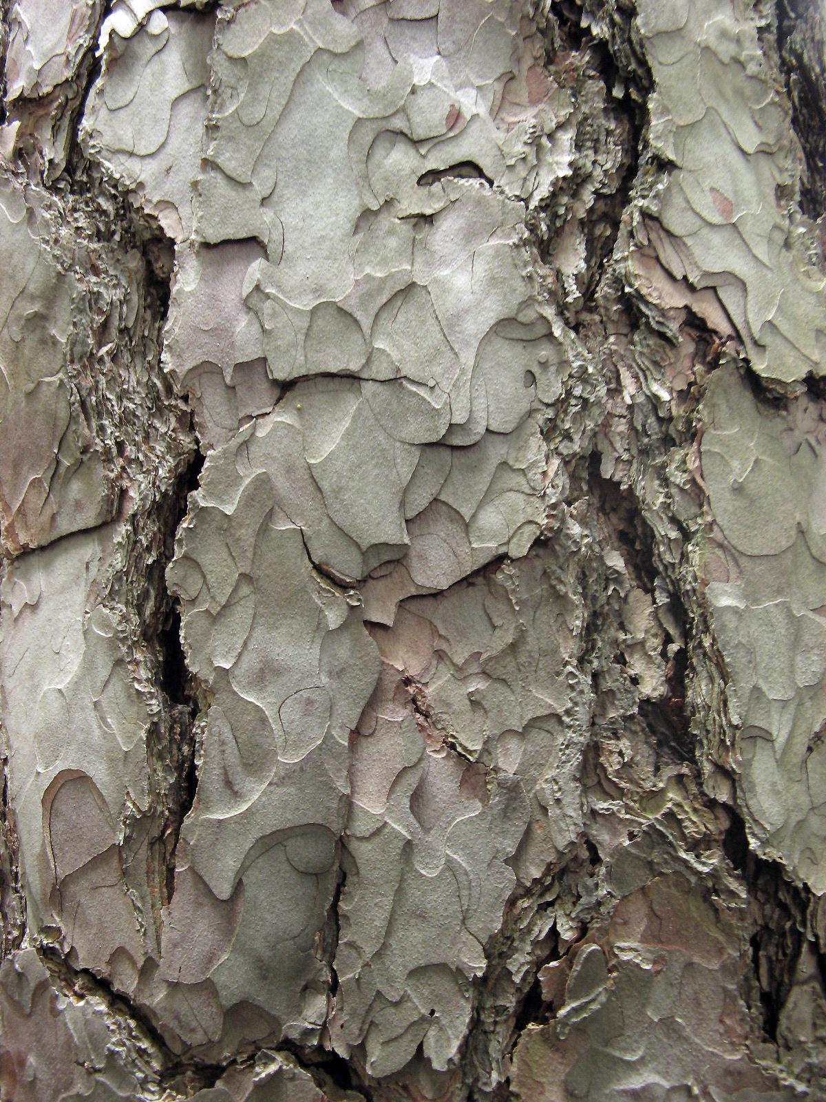 Trunk Texture, Bspo06, Nature, Rough, Surface, HQ Photo