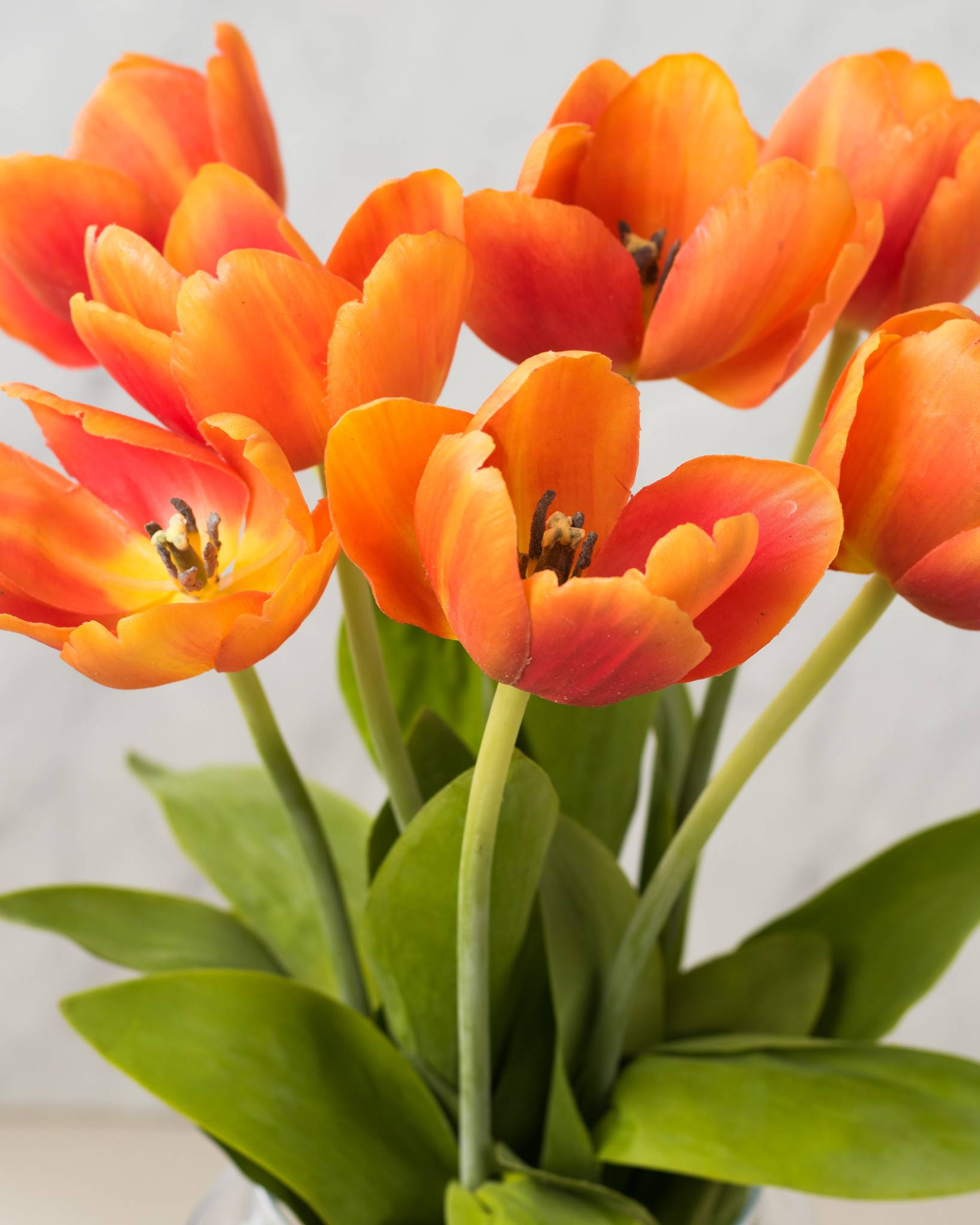 Tulip Flower Stems | Balsam Hill