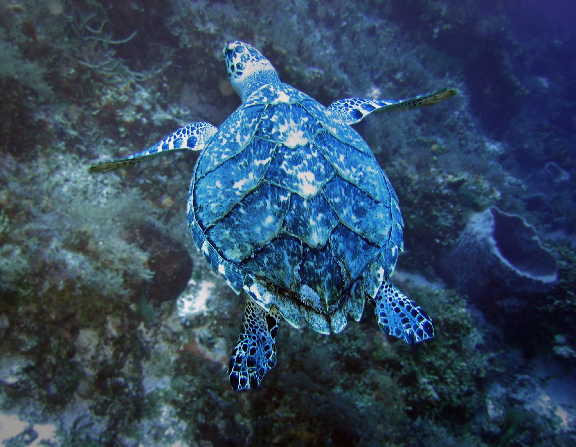 Turtle in the Ocean, Animal, Beach, Blue, Nature, HQ Photo