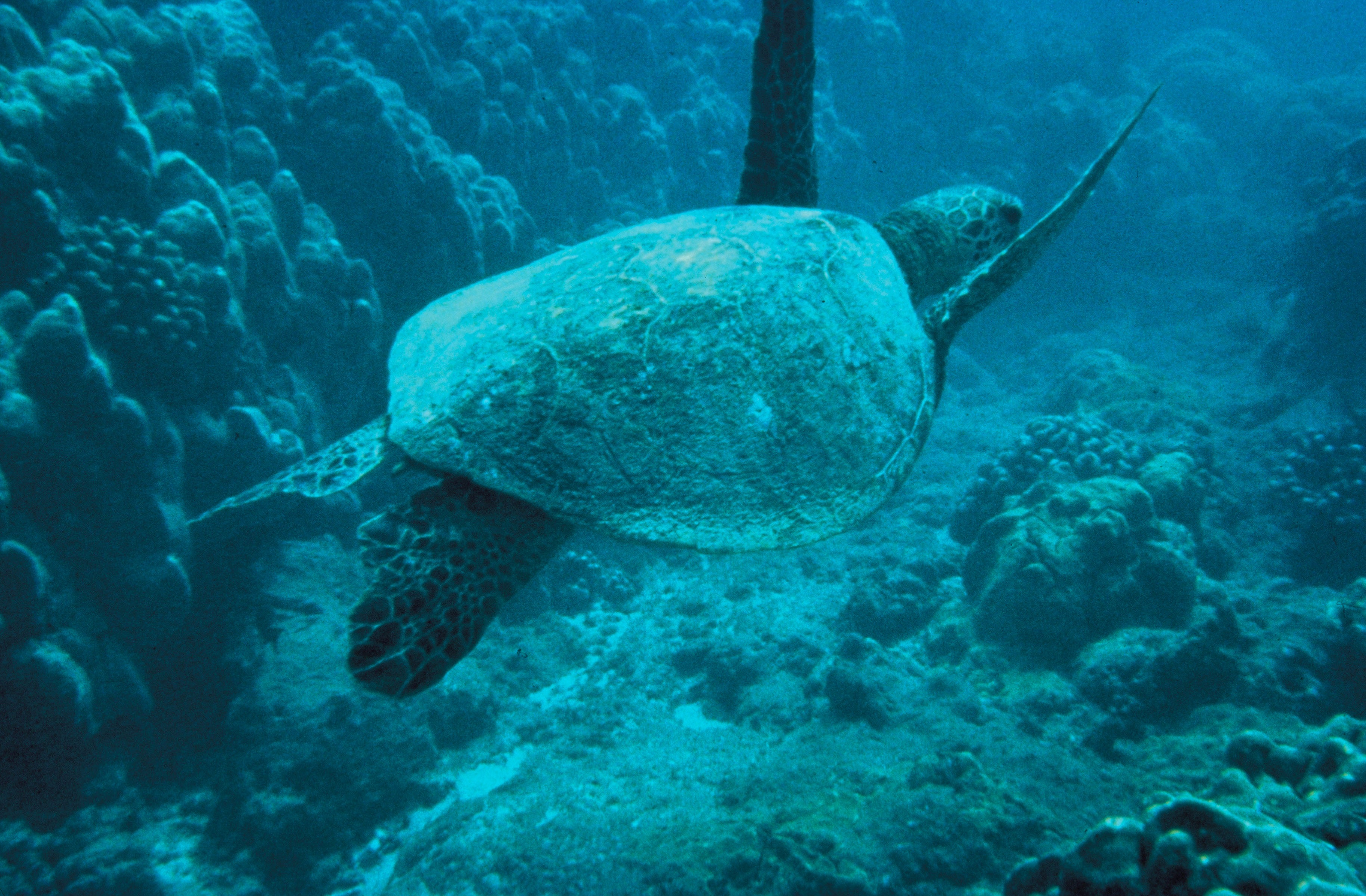 Turtle in the sea photo