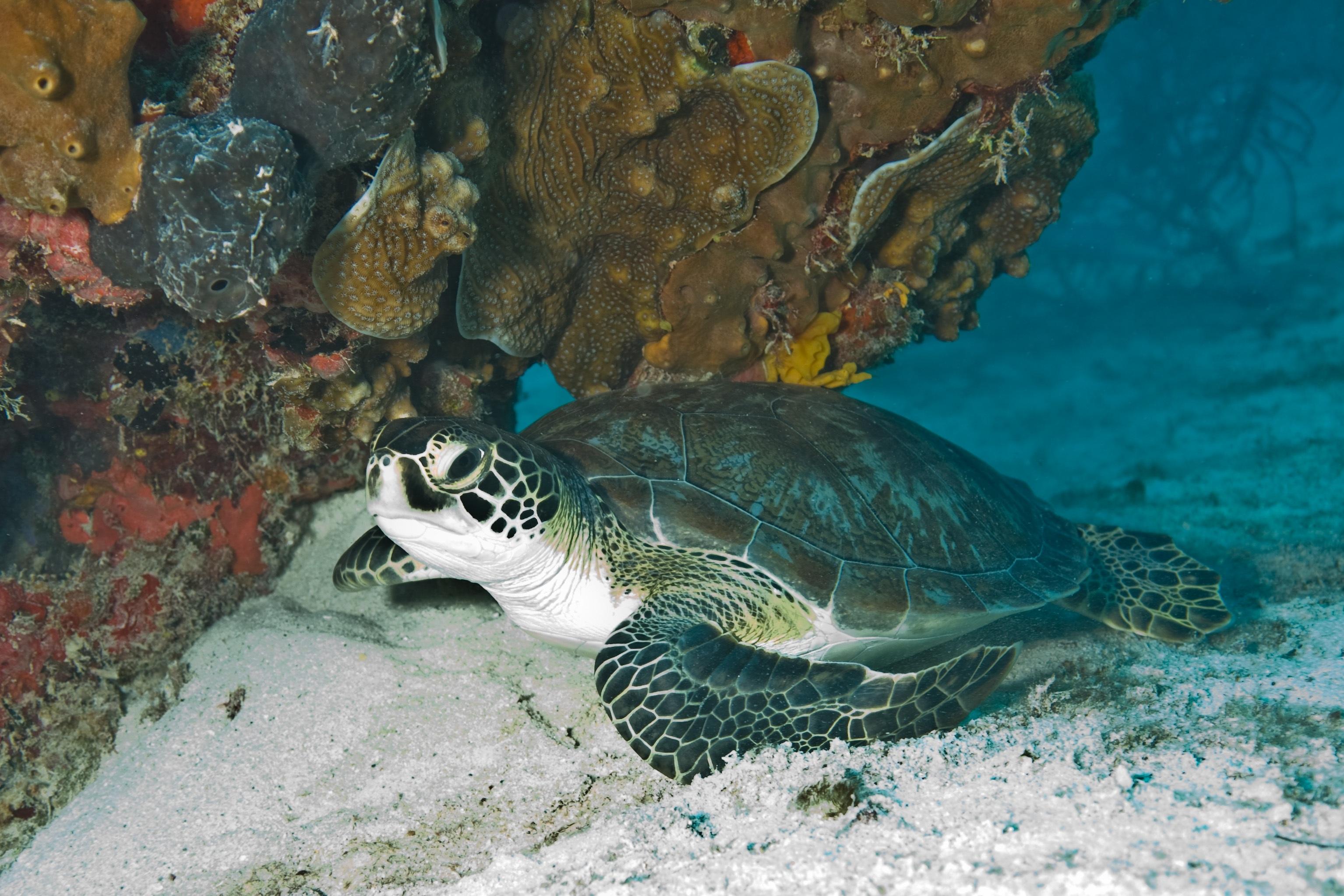 Turtle in the Sea, Animal, Beach, Blue, Nature, HQ Photo
