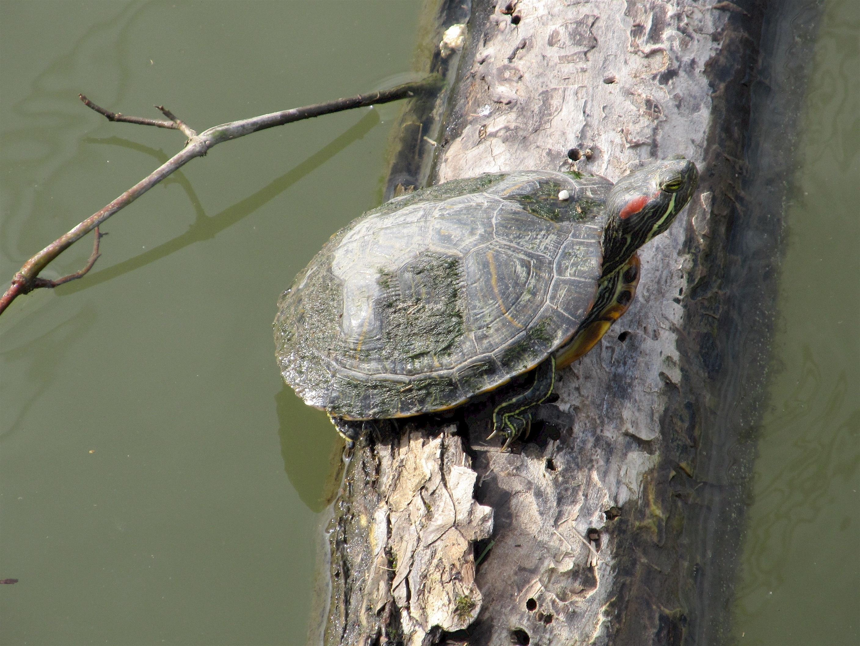 Turtle on the tree photo