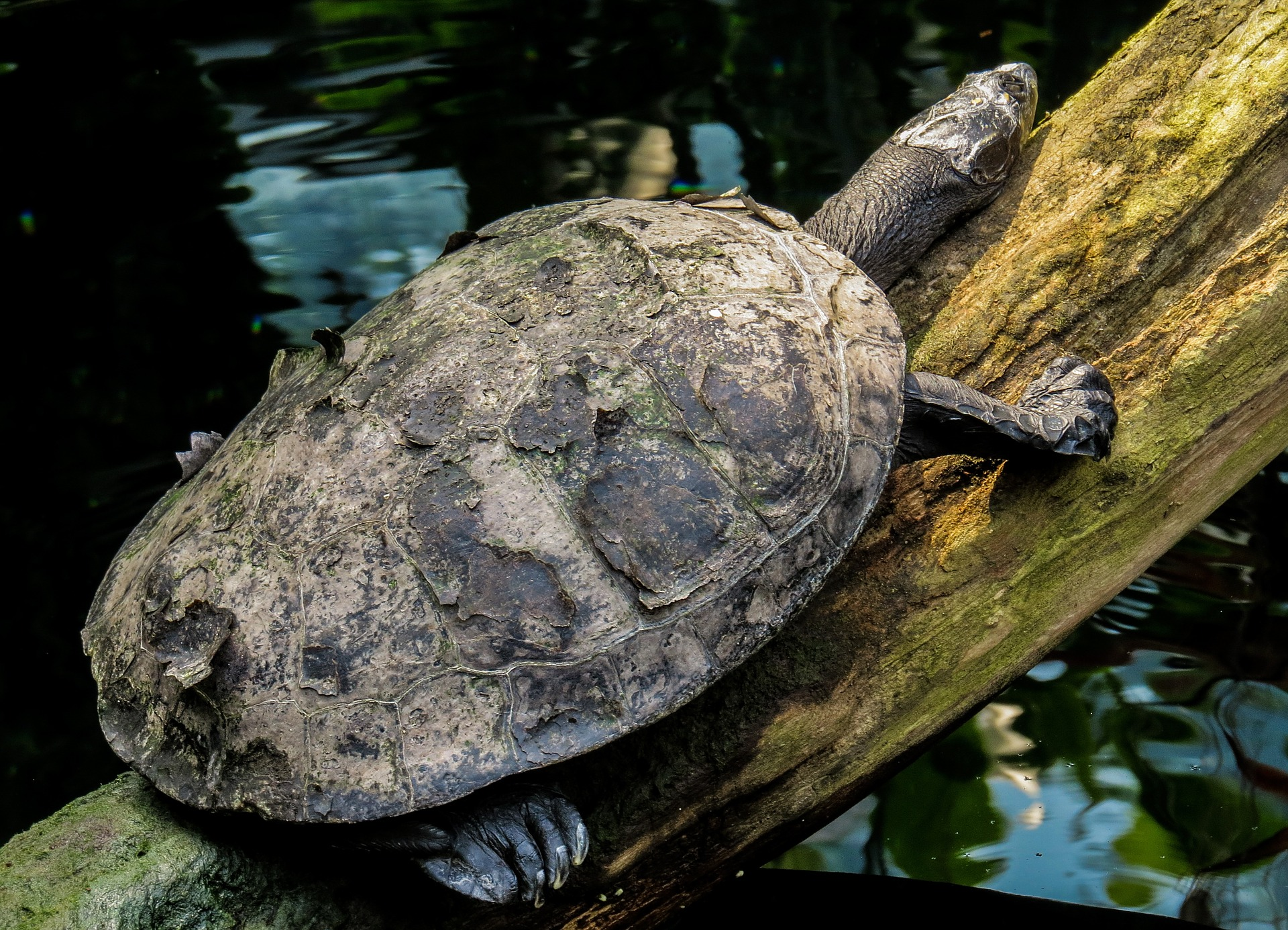 Turtle on the Wood, Animal, Nature, Route, Tortoise, HQ Photo