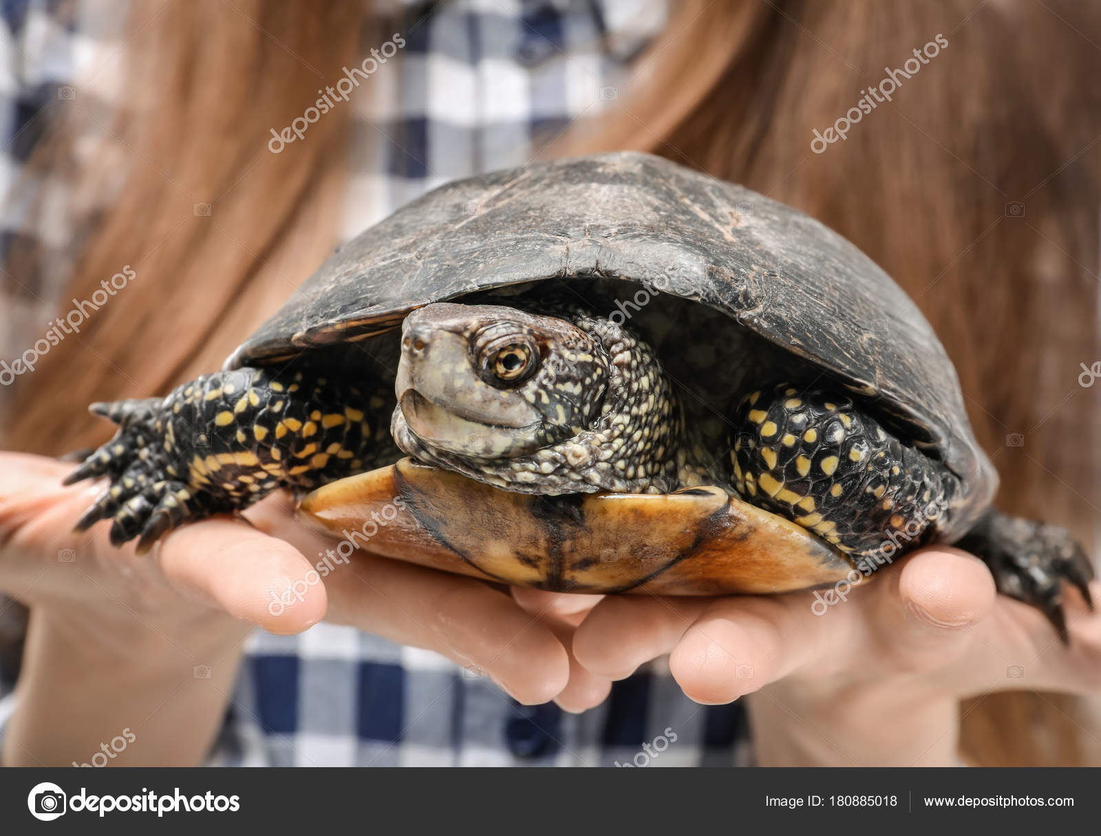 Turtle pet closeup photo