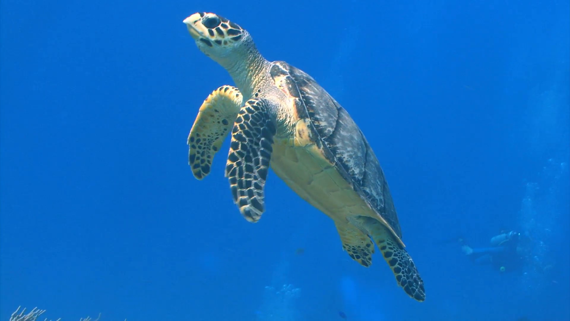 Sea Turtle Swimming Up to Surface Stock Video Footage - Videoblocks