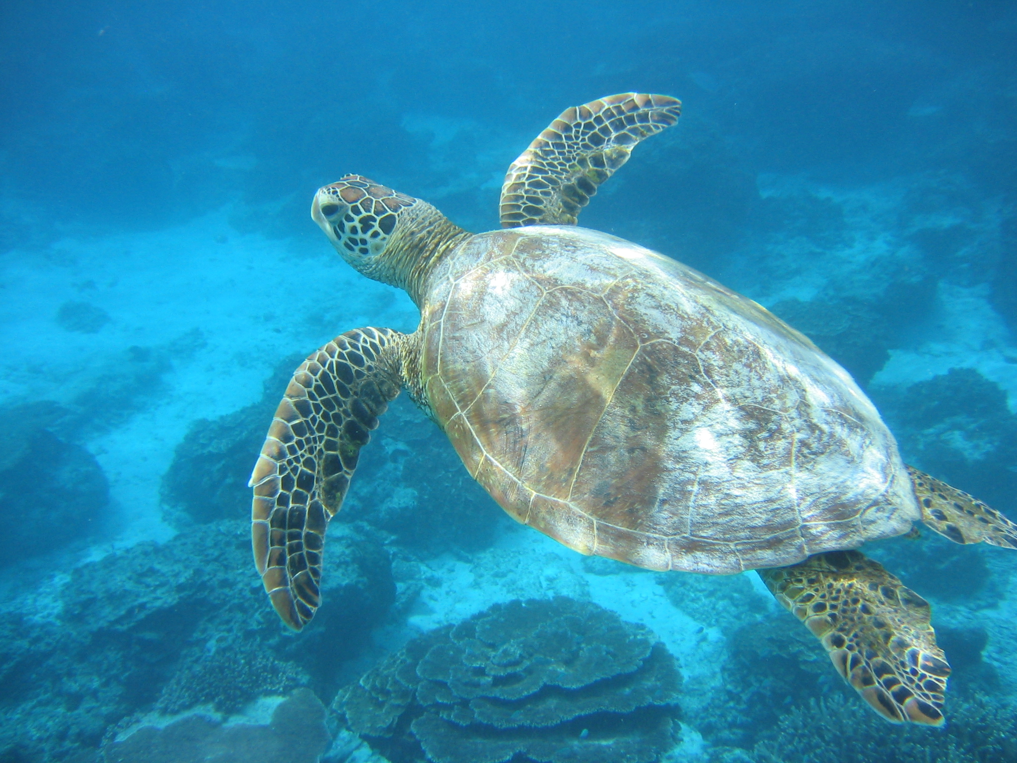 The Fact Files: How do you find out why a sea turtle has epileptic ...