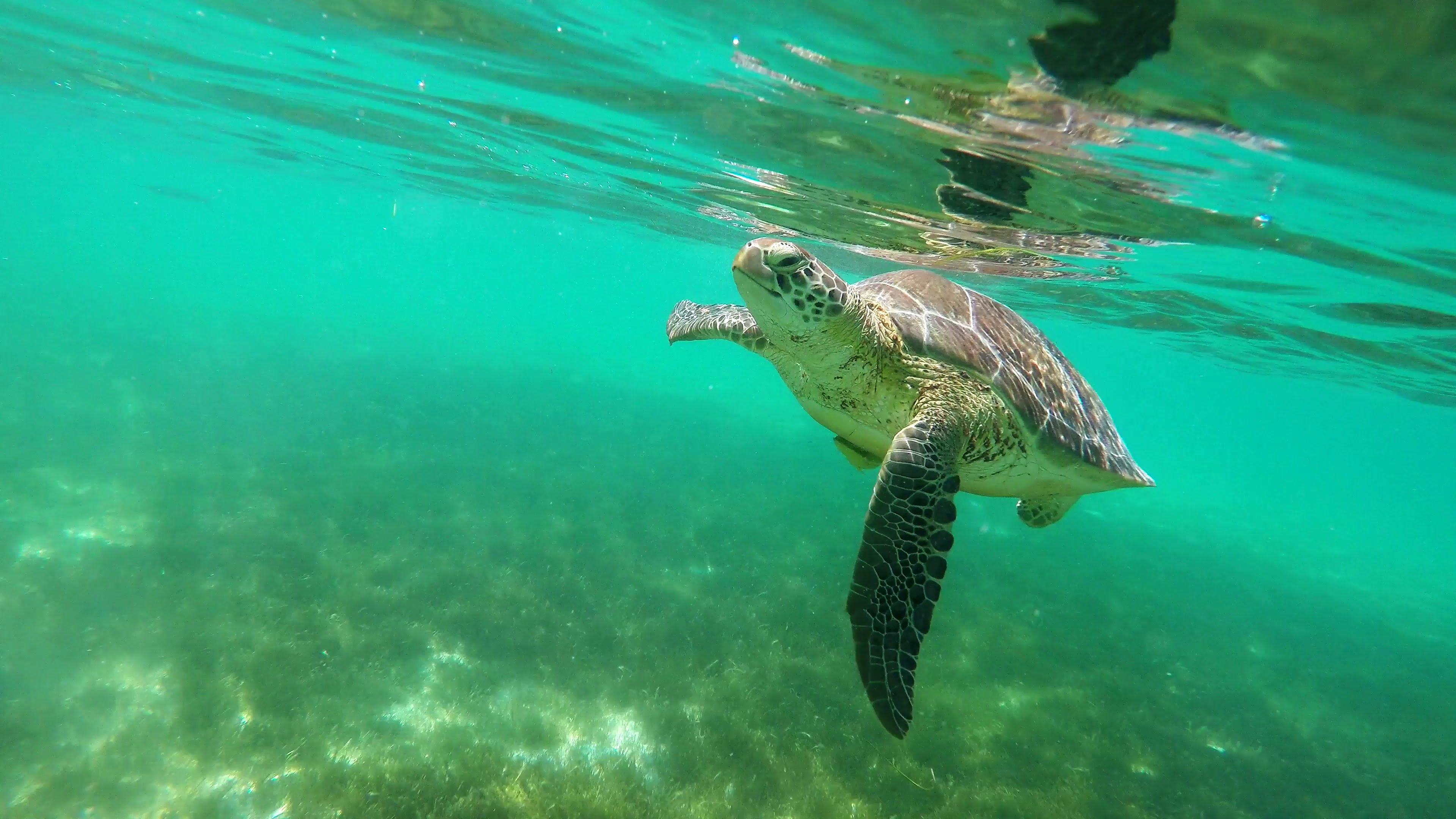 Sea Turtle Snorkeling and swimming in Akumal Bay Riviera Maya ...