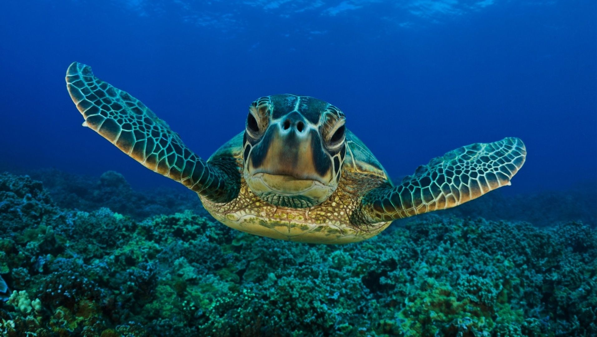 Turtle Swimming Wallpaper Photos #155i0c 1913x1080 px 489.06 KB ...
