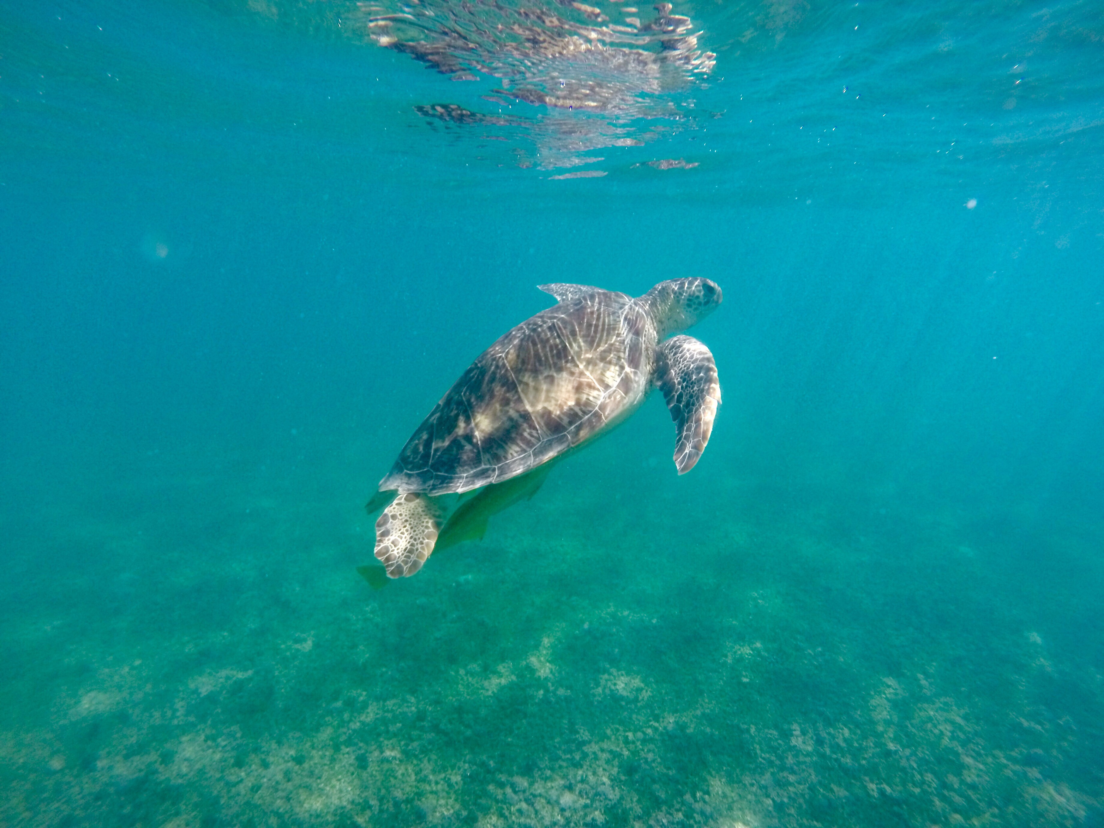 How to Swim with Wild Turtles in Akumal, Mexico (Updated for 2018 ...