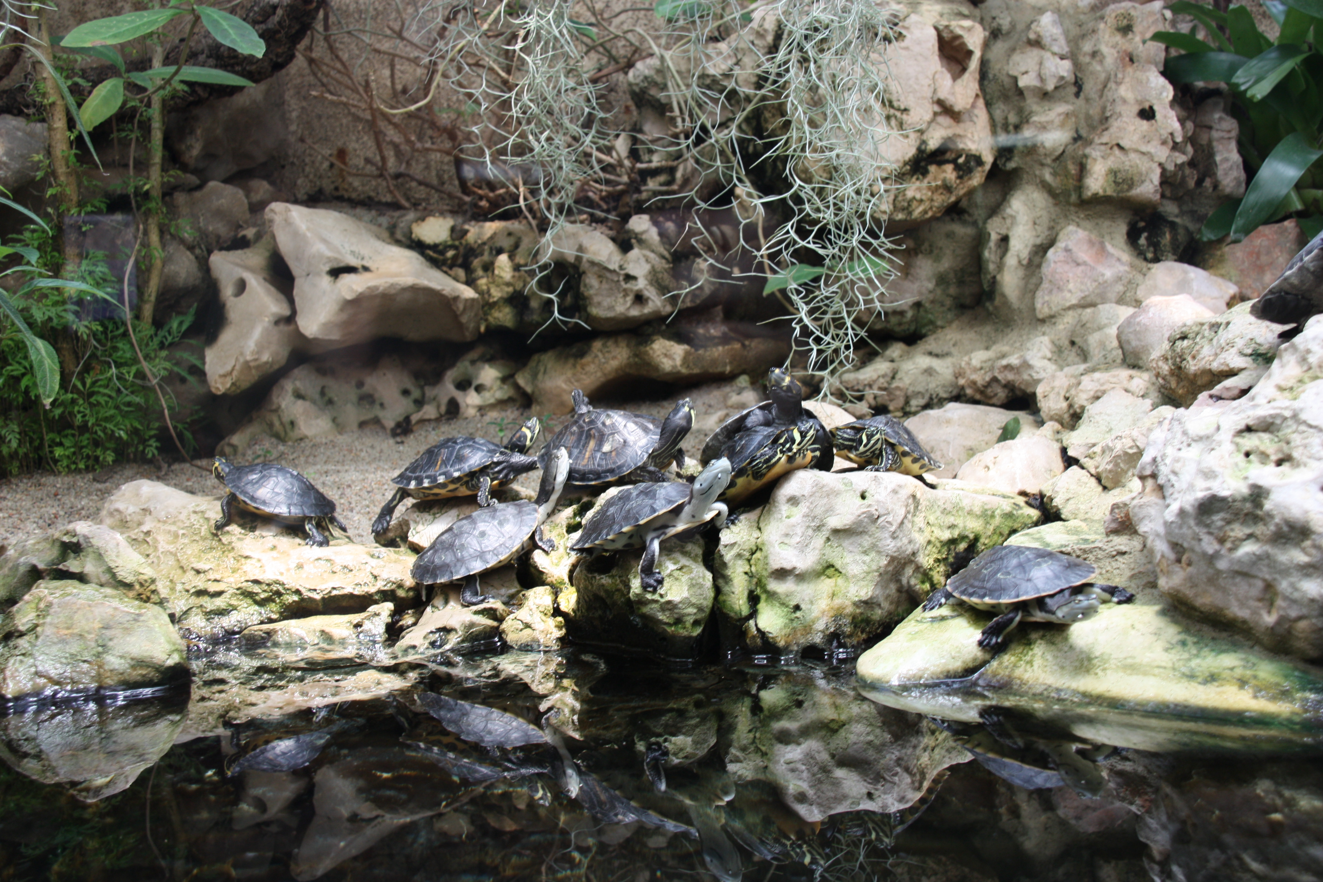 Turtles photo