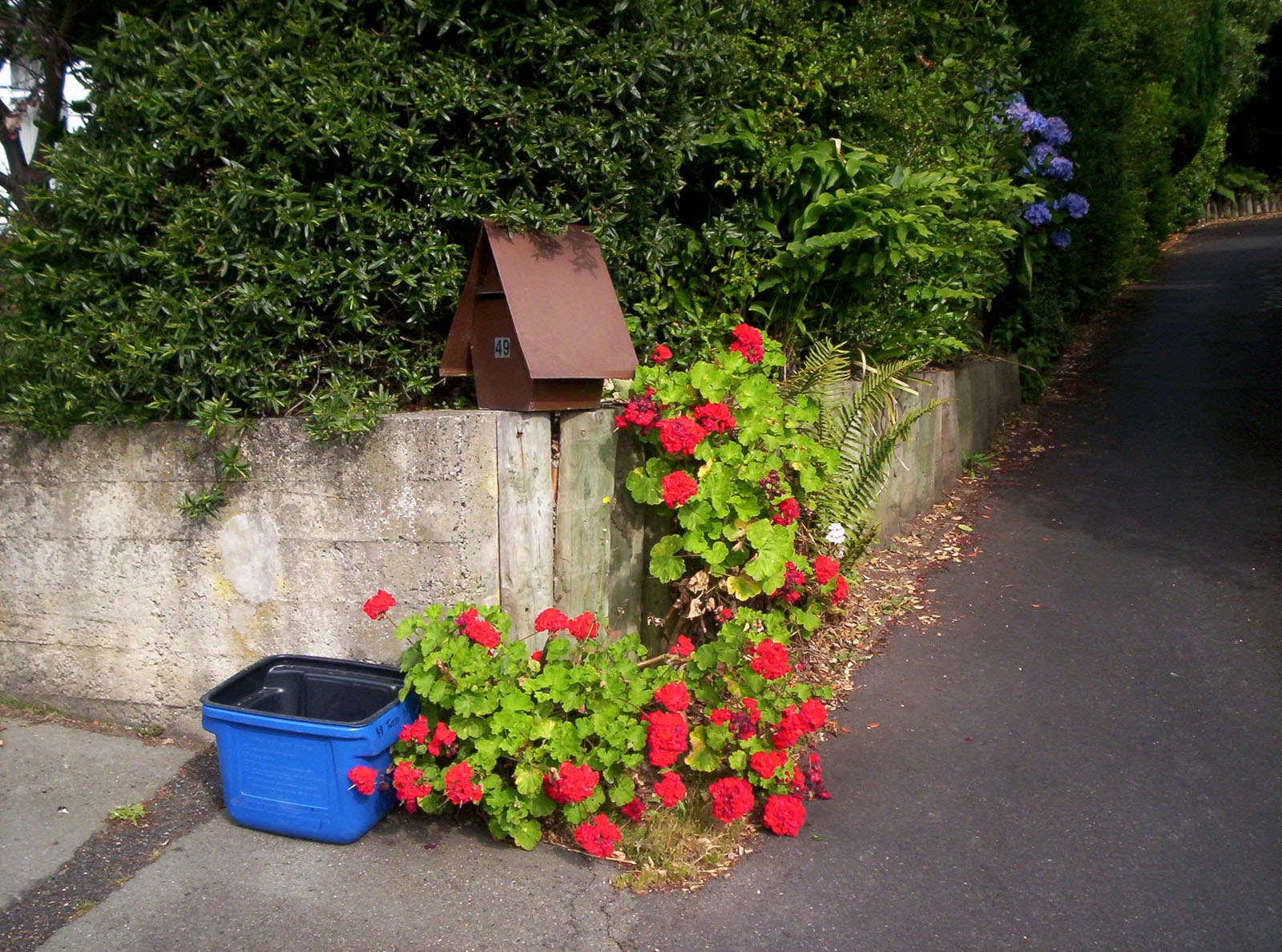 Tweed recycling letterbox and geraniums photo
