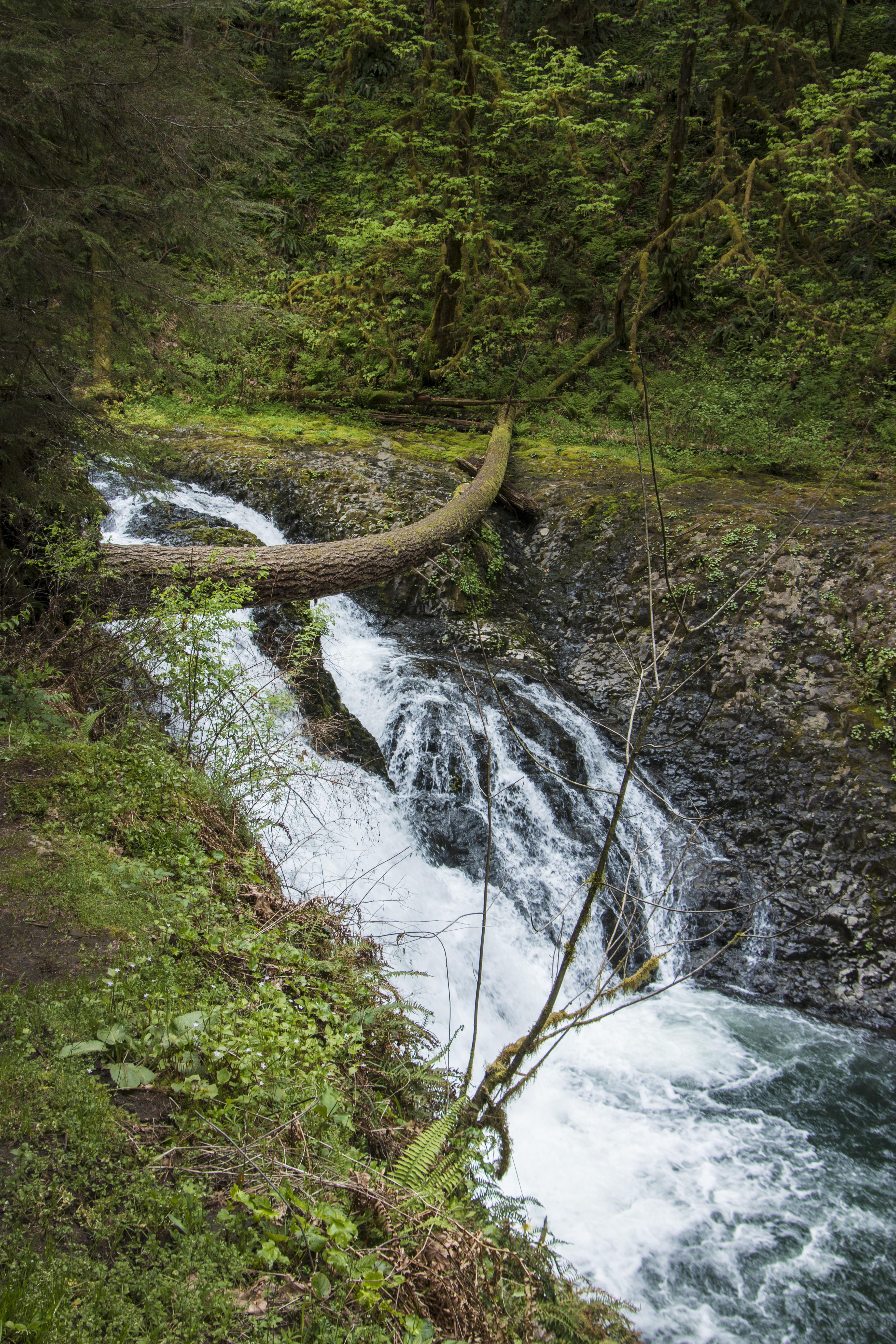 Twin falls, silver creek park oregon photo