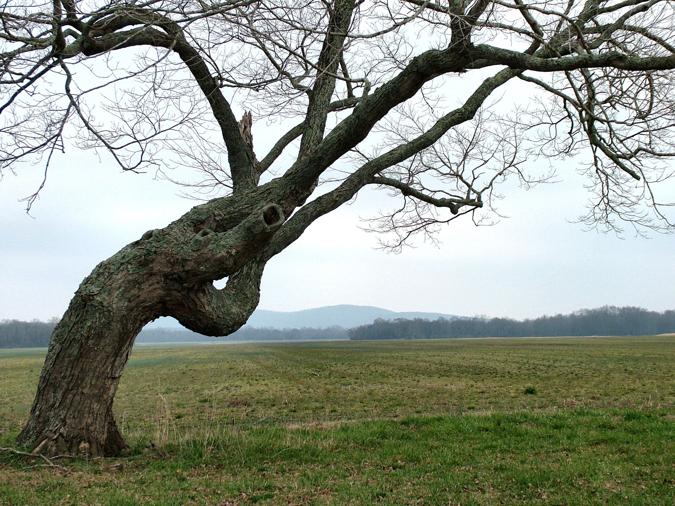 twisted tree trunk - Google Search | Fences Research | Pinterest ...