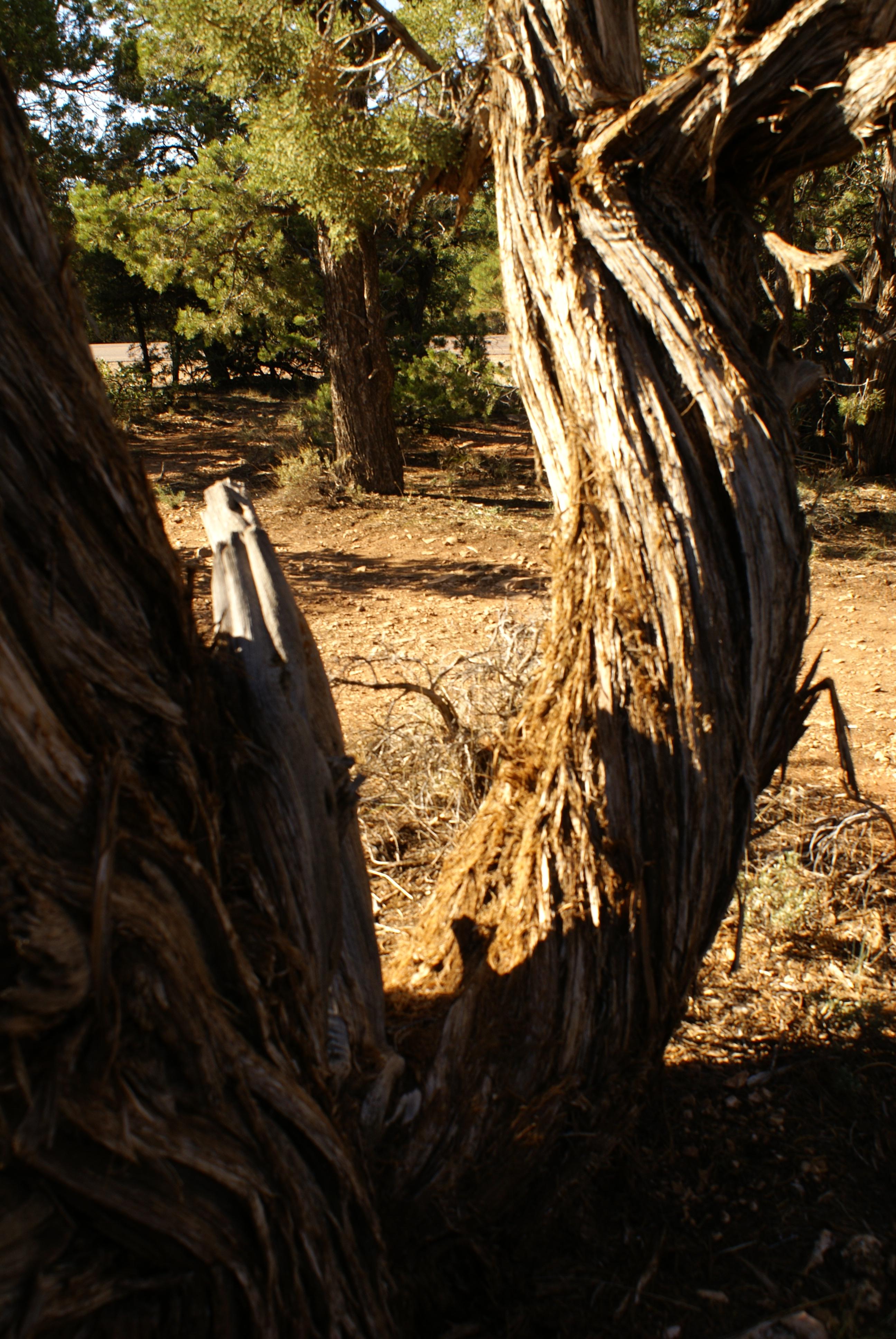 Twisted tree, Bark, Bspo07, Dry, Plant, HQ Photo