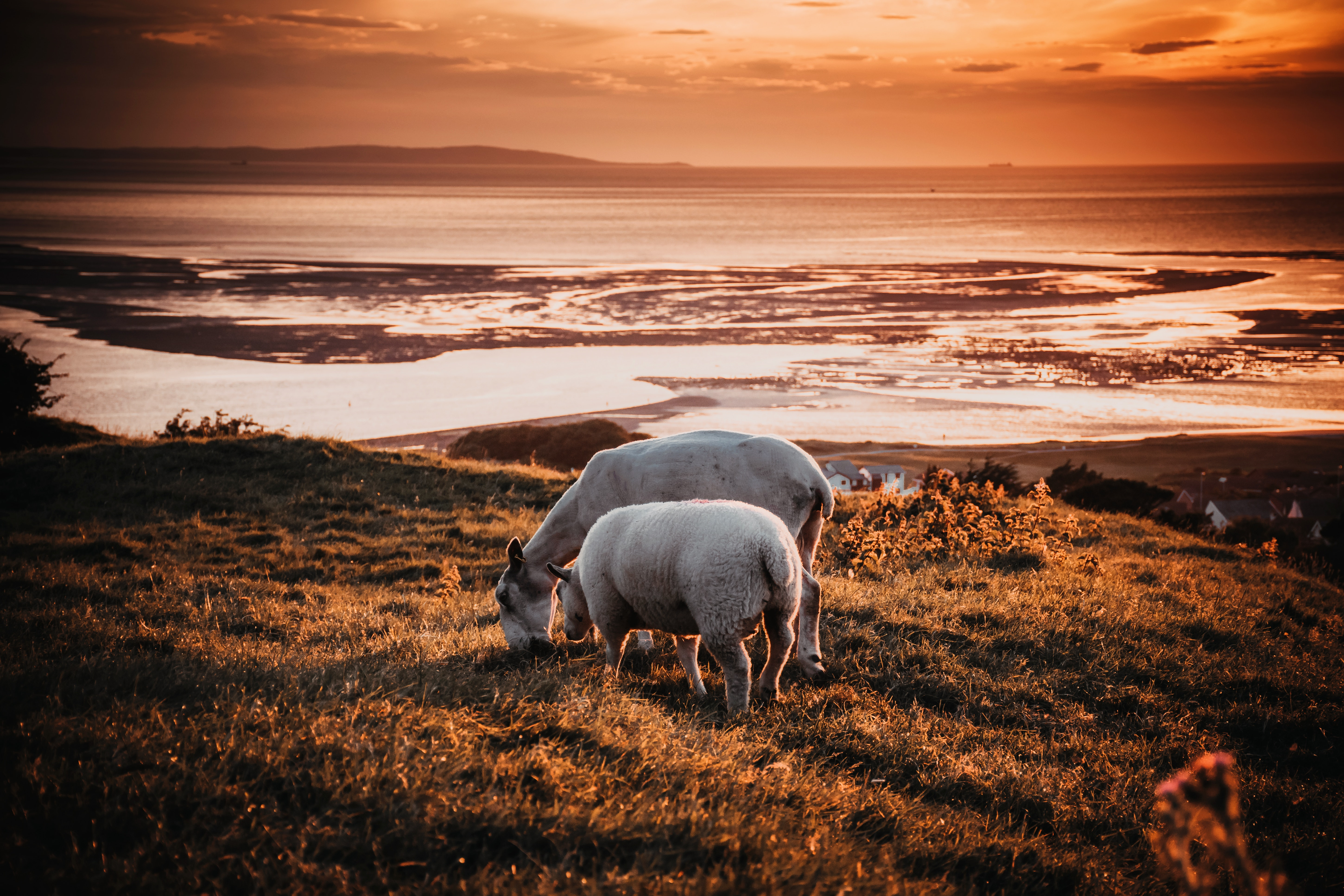 Two animals on field during sunset photo