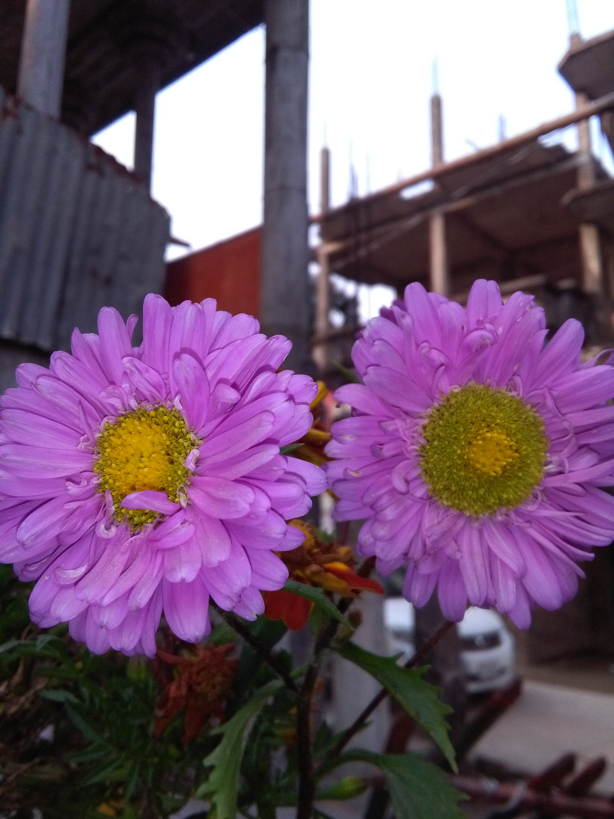 Photography of the two beautiful flowers in your hands — Steemit