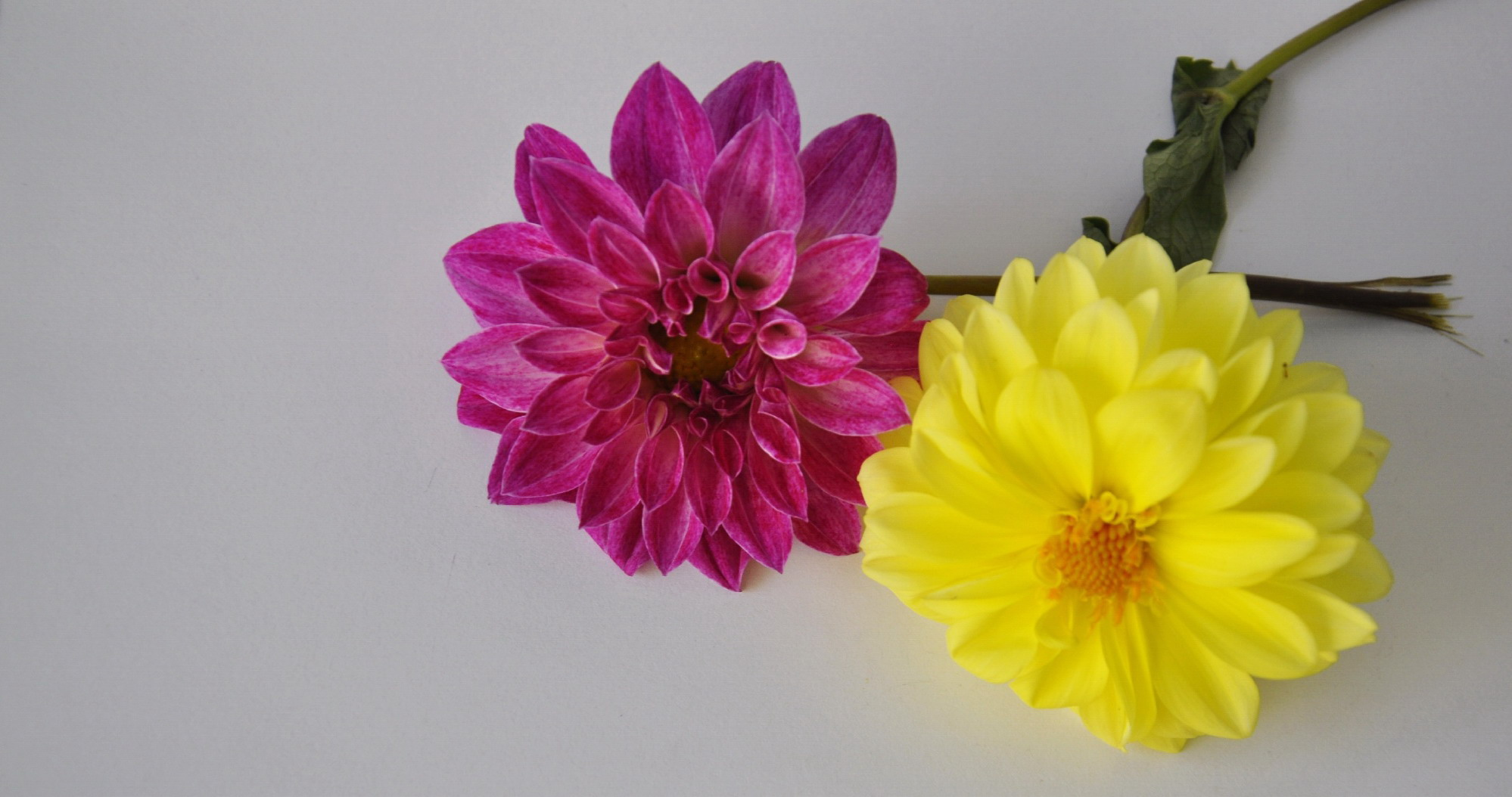 Free Photo Two Beautiful Flowers Love Lovely Natural Free