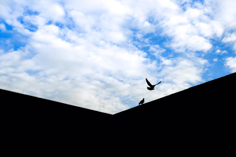Two black birds photo