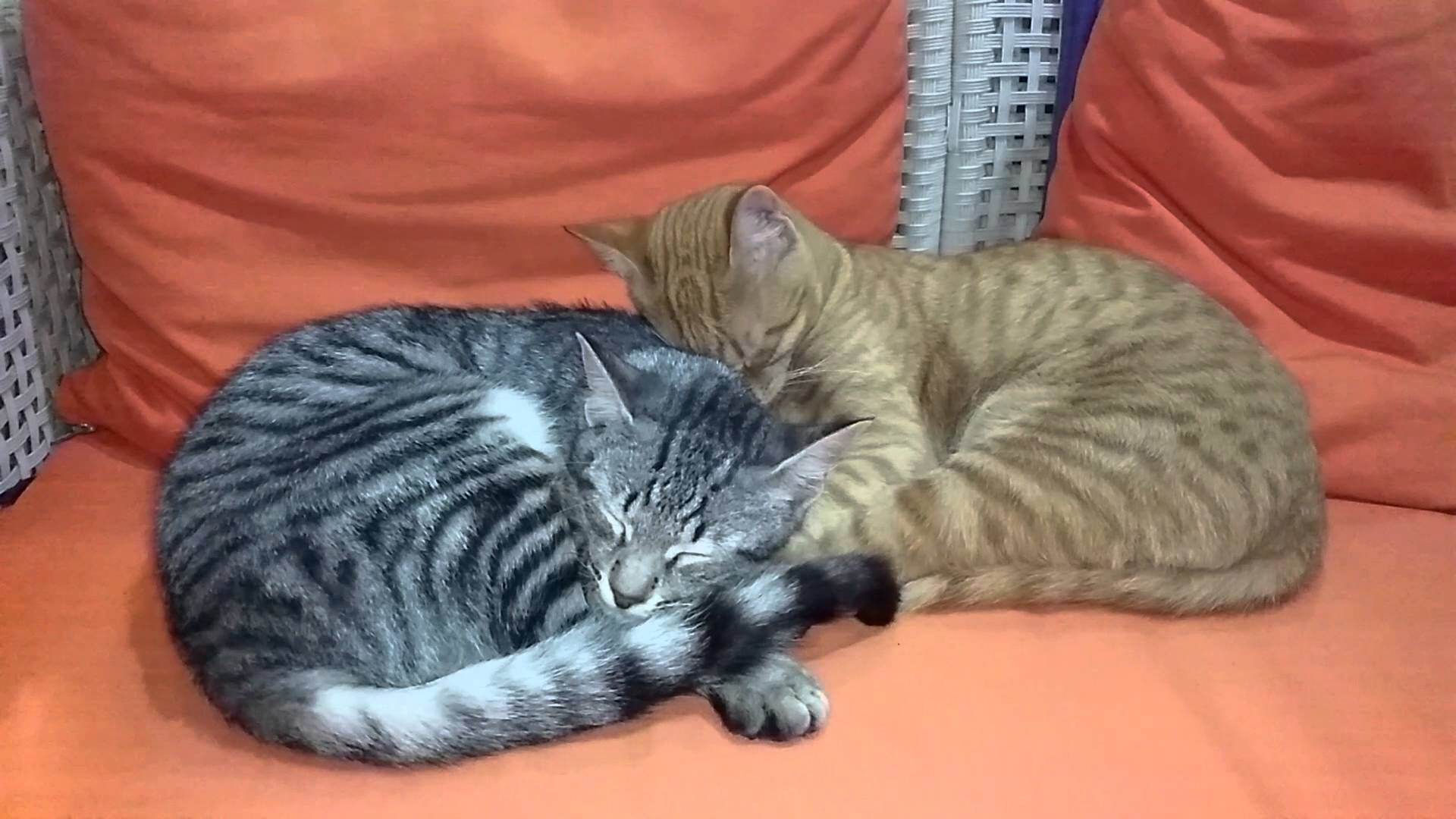 two cats sleeping together - YouTube