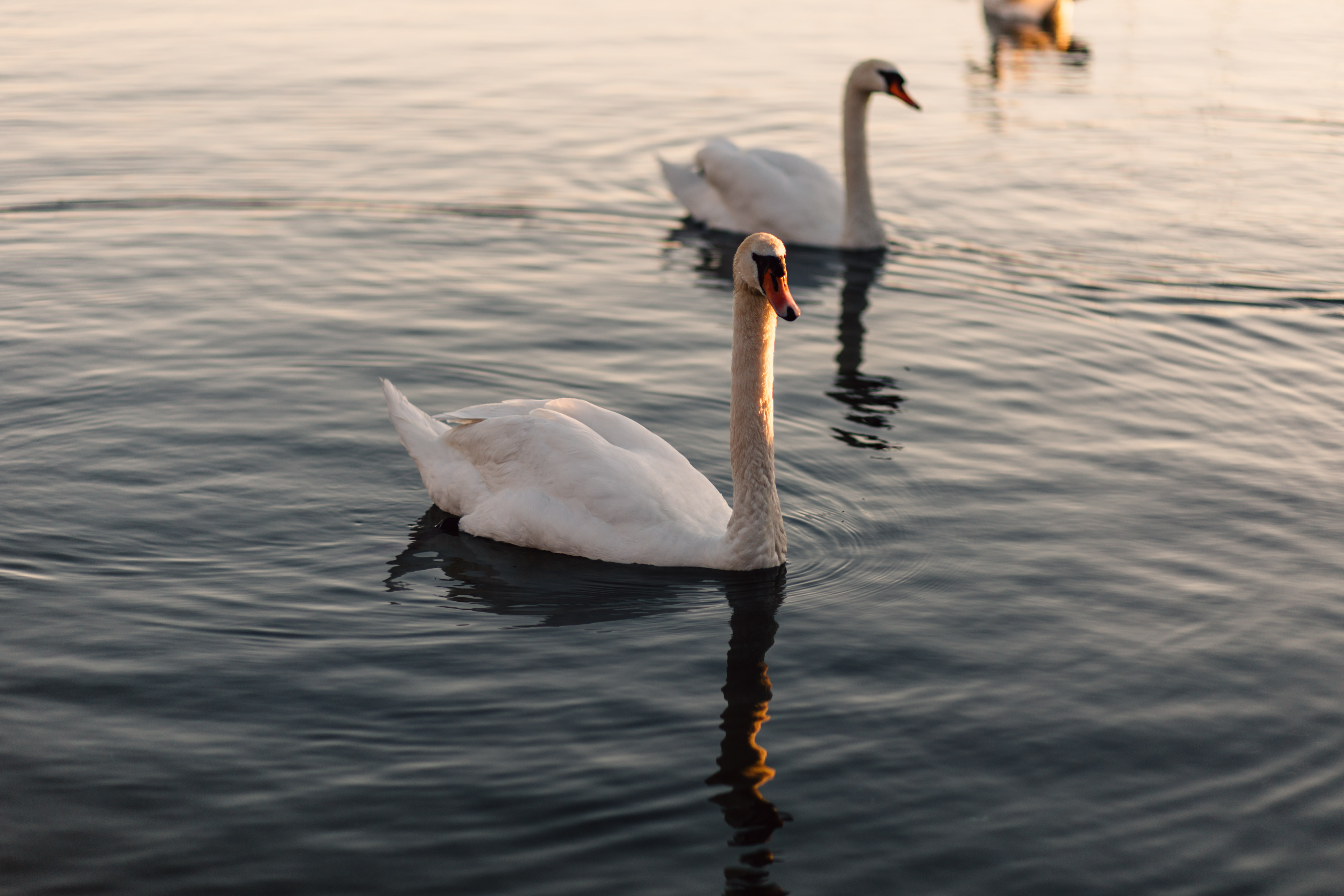 Two Ducks, Bird, Ducks, Lake, River, HQ Photo
