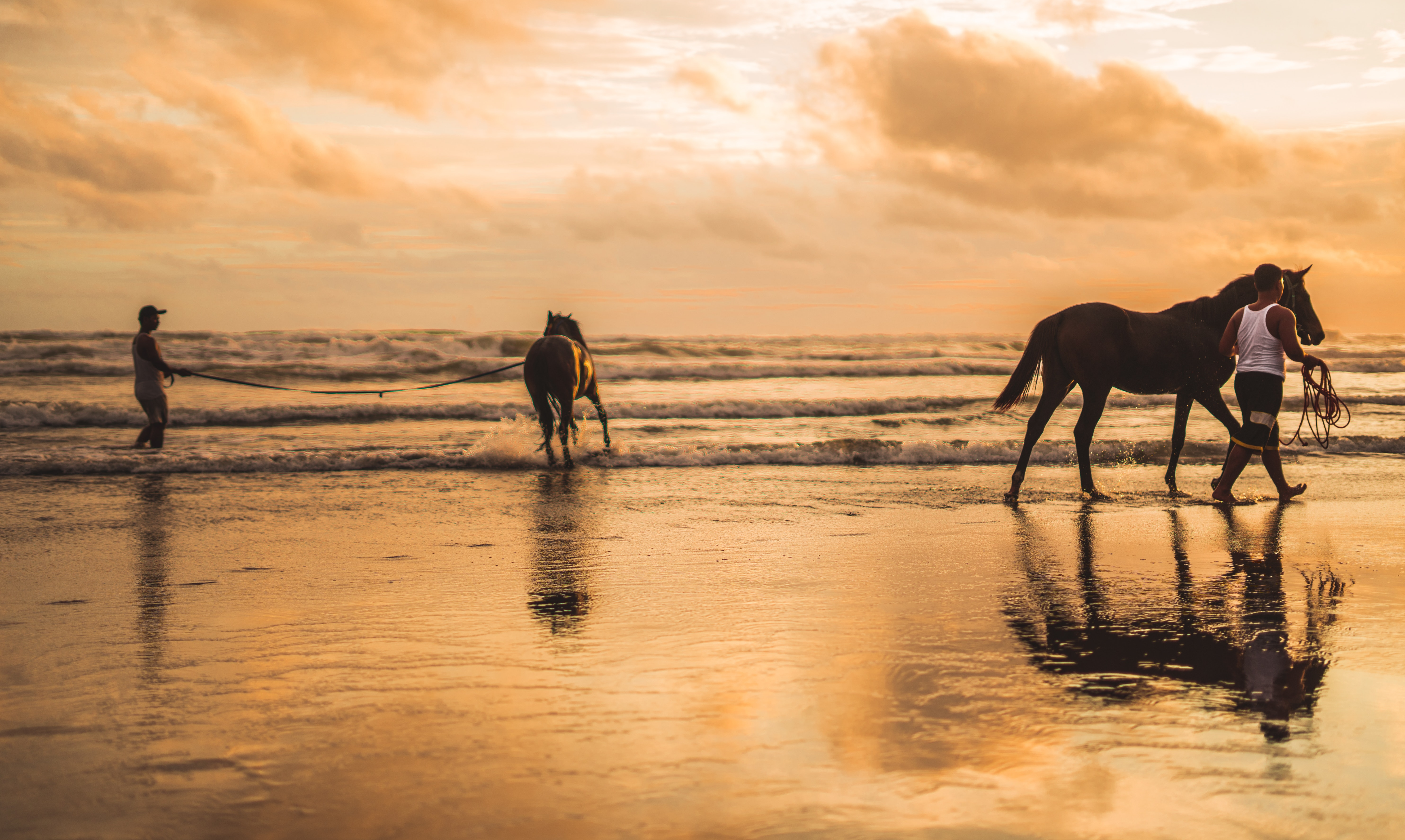 Two horses on the beach photo