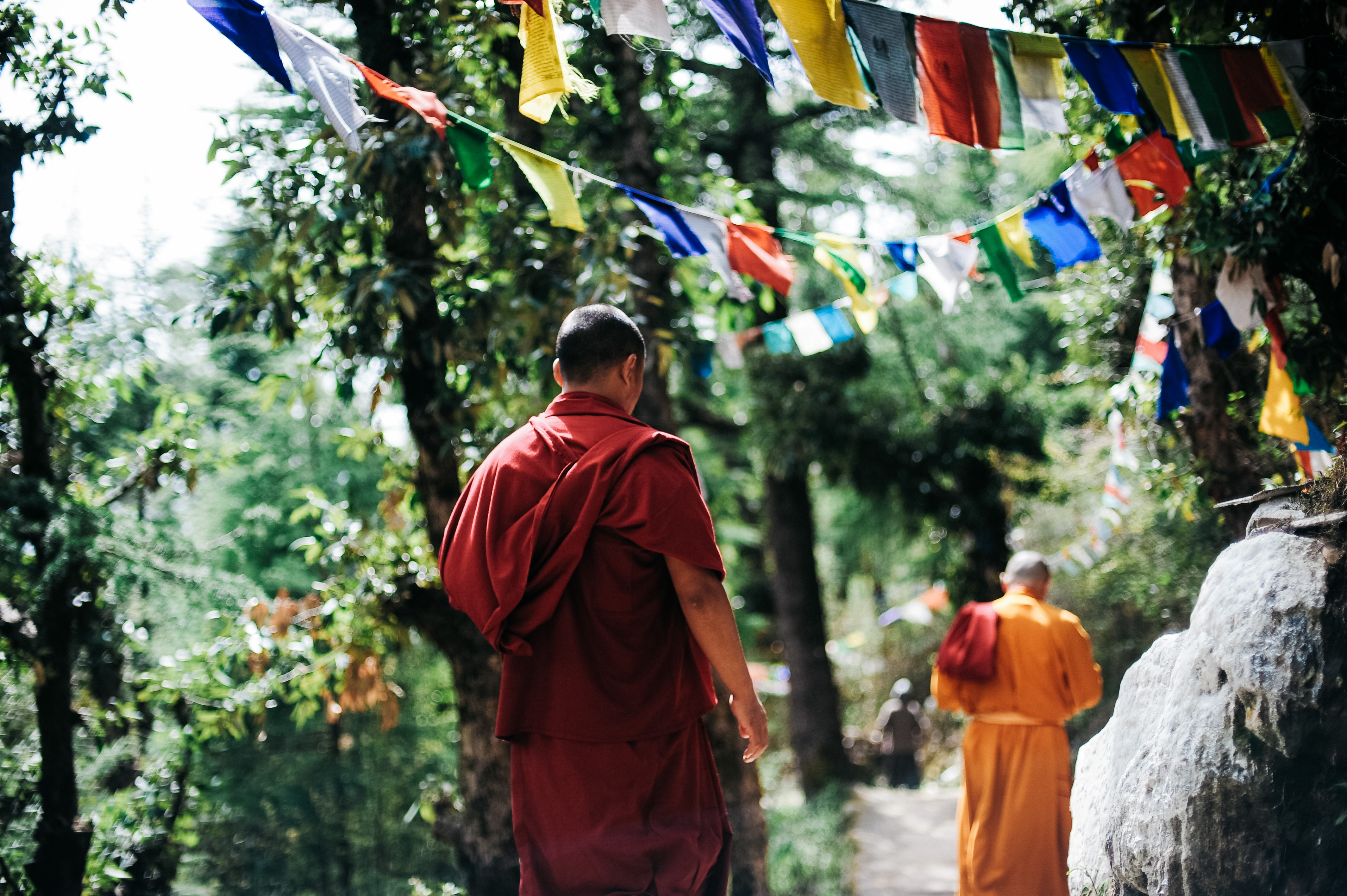 Two monks walking between trees photo