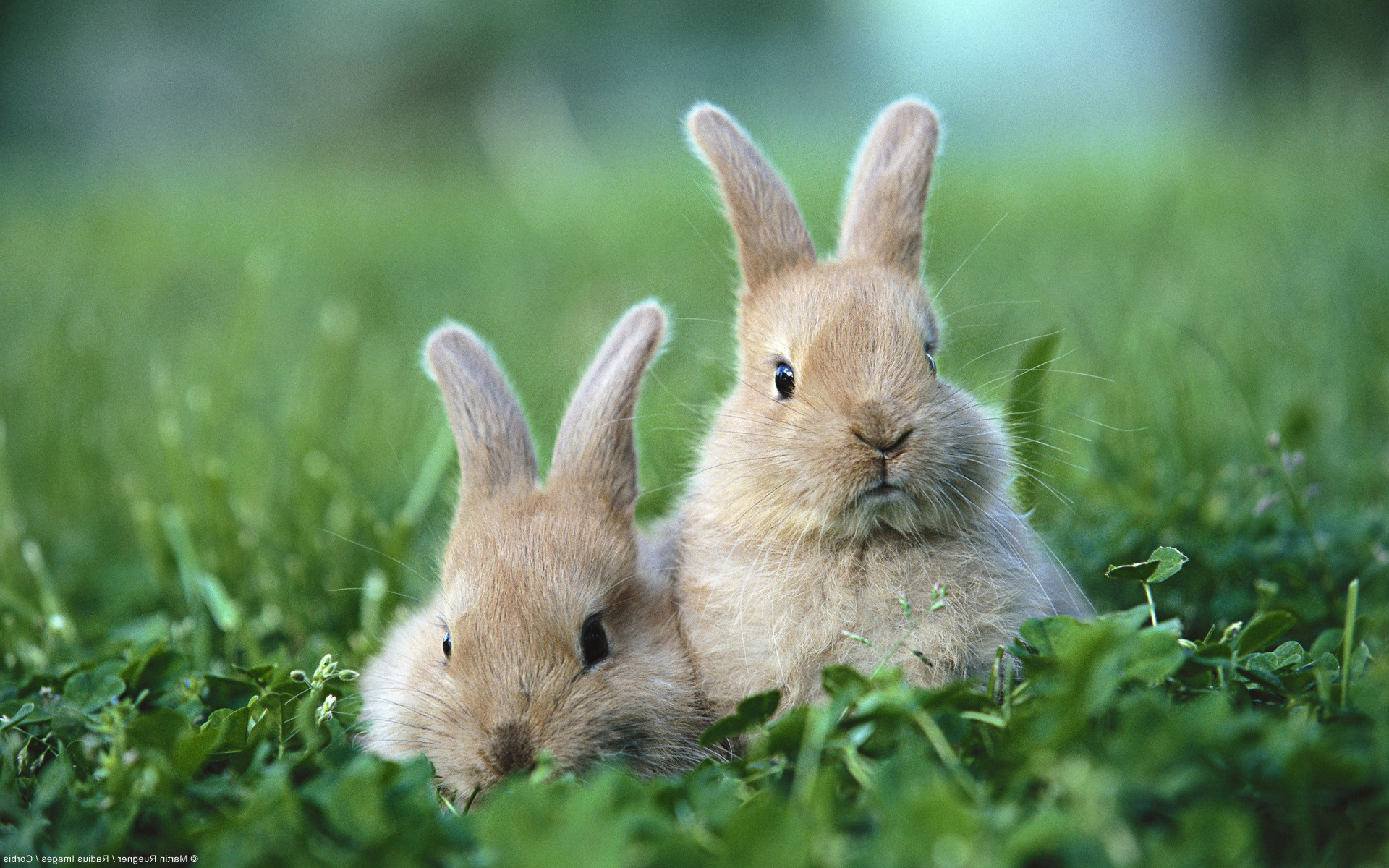 Two rabbits photo