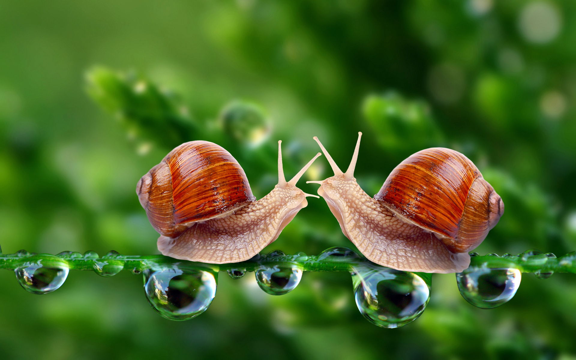 Two snails photo