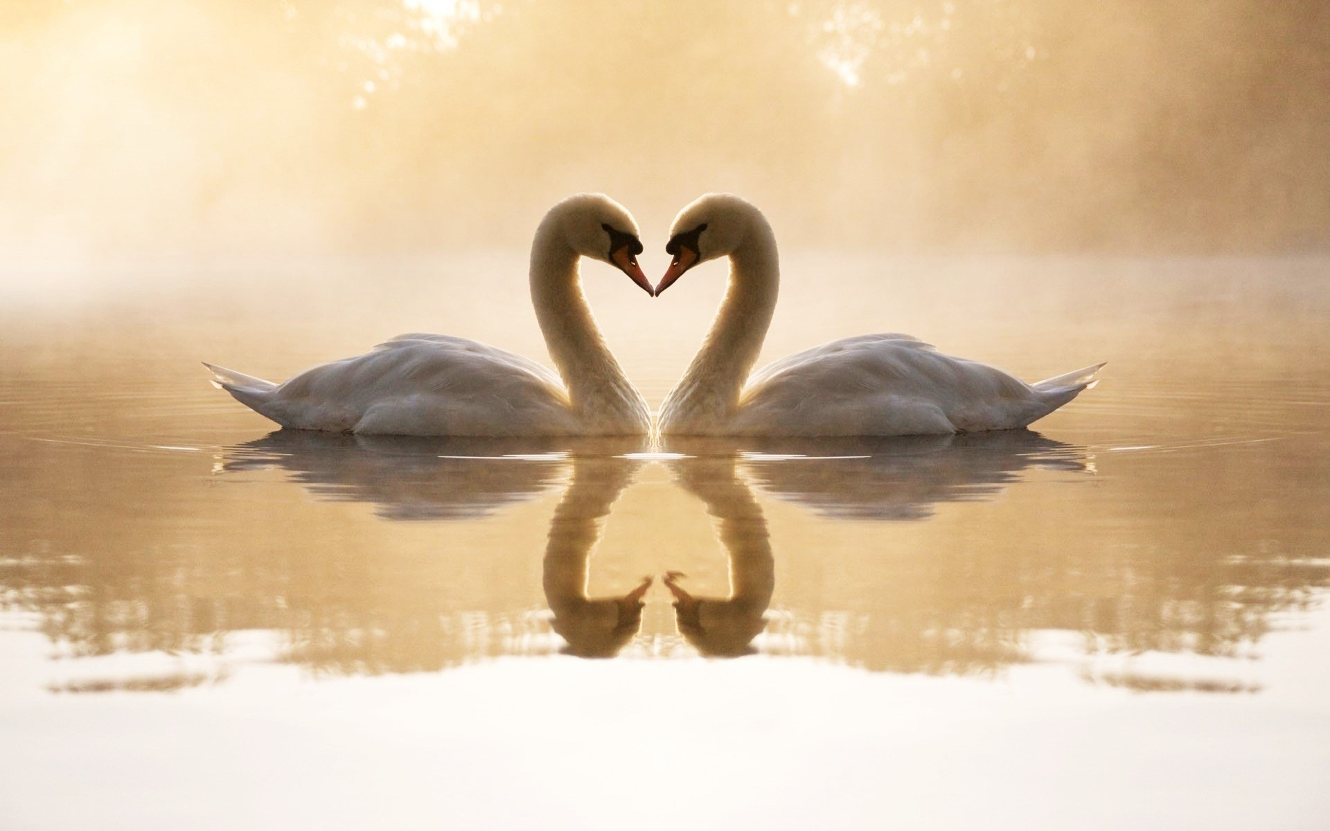 Two Swans Drawing HD Wallpaper, Background Images