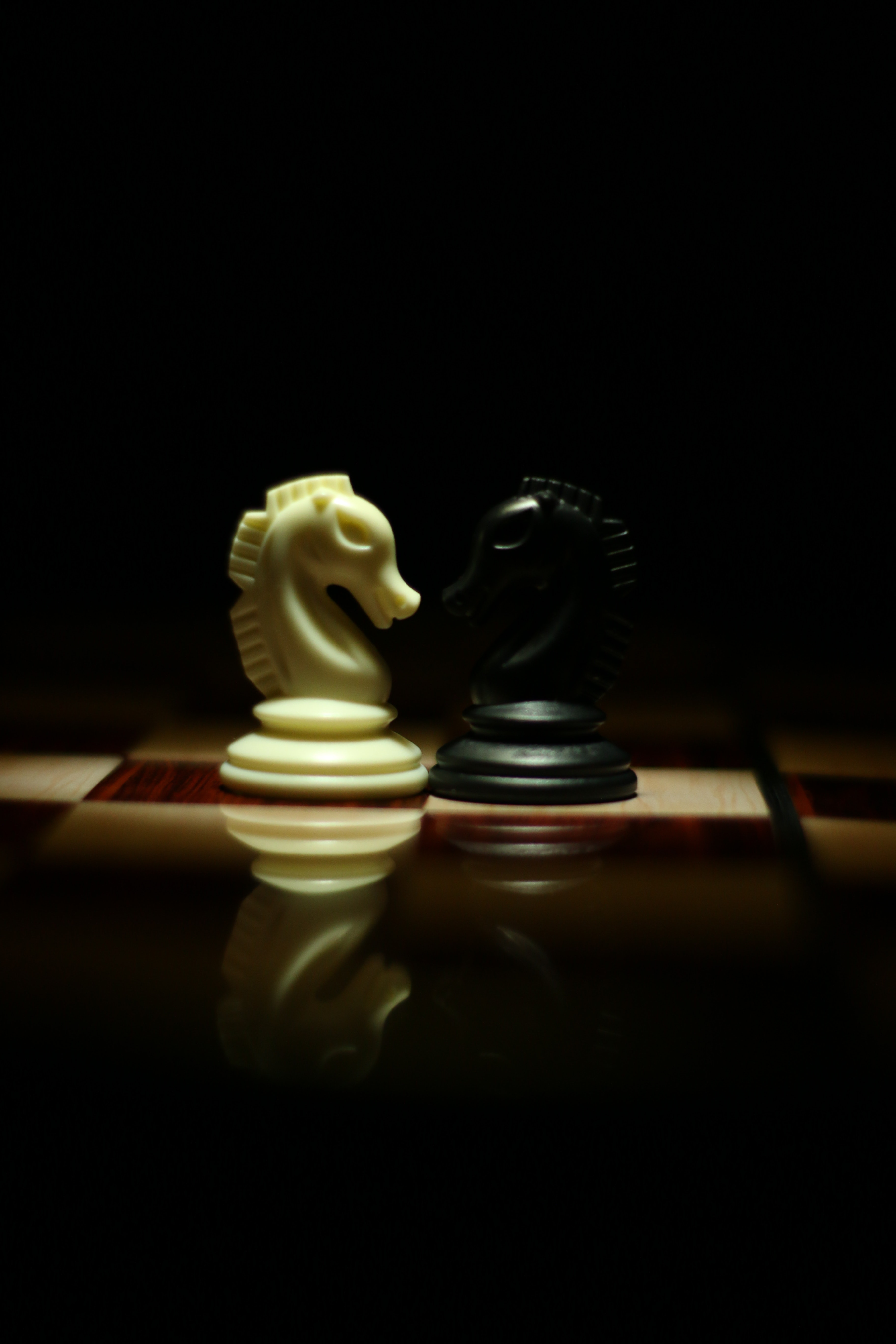 Two White and Black Chess Knights Facing Each Other on Chess Board, Game, Tournament, Tactics, Strategy, HQ Photo