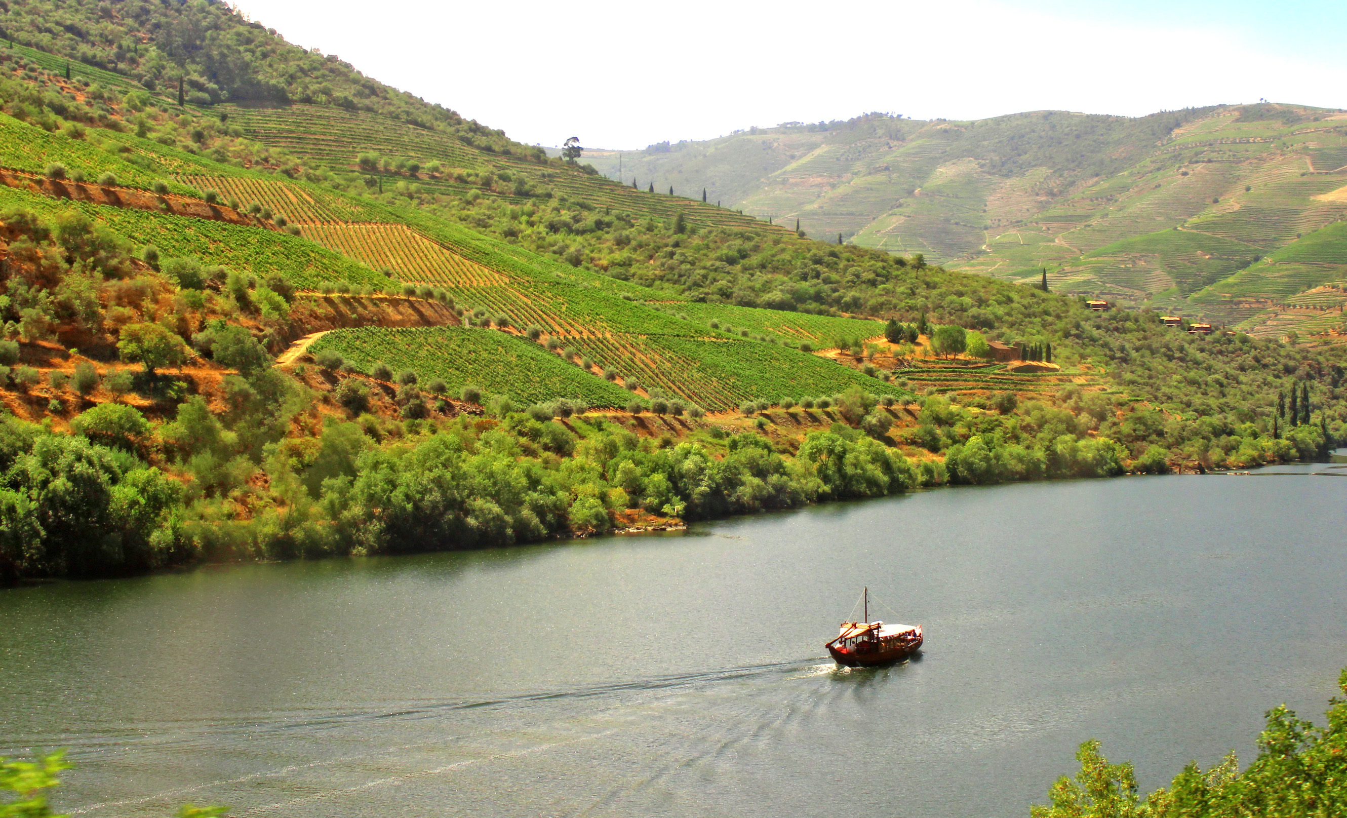 Typical Rabelo Boat Cruising Along the Douro River - Douro Valley, Agriculture, Port, Scenery, Sandeman, HQ Photo