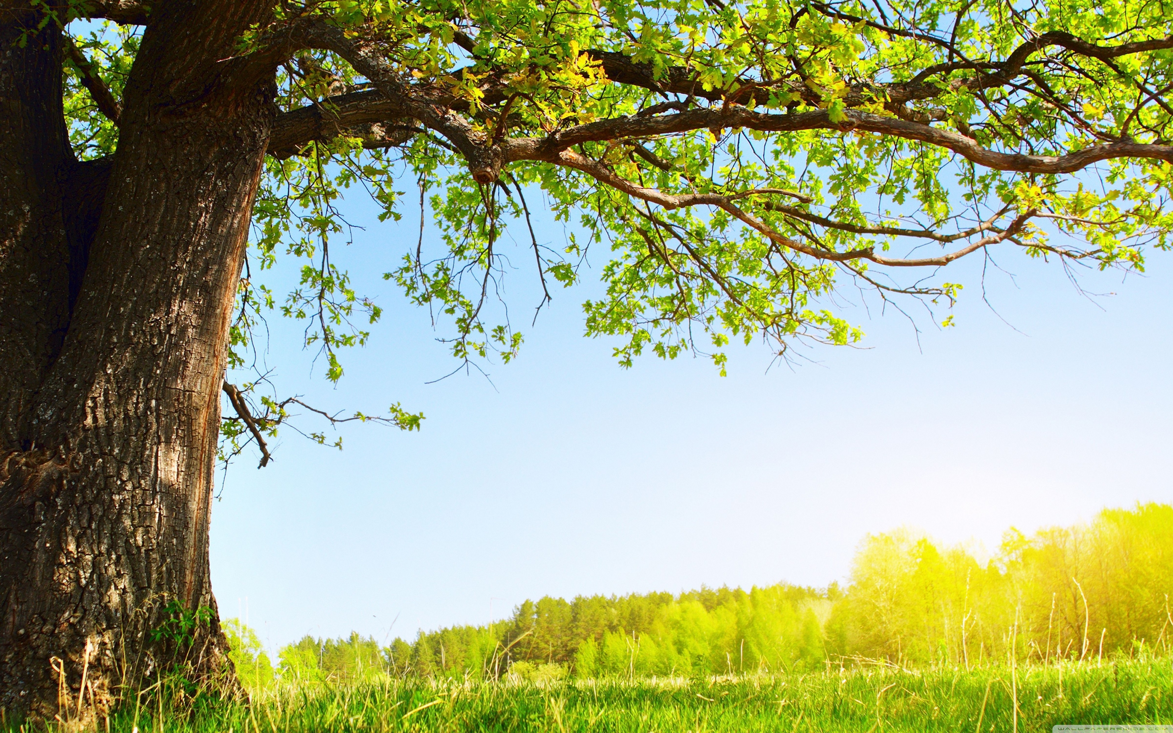 free photo under the tree park people nature free download