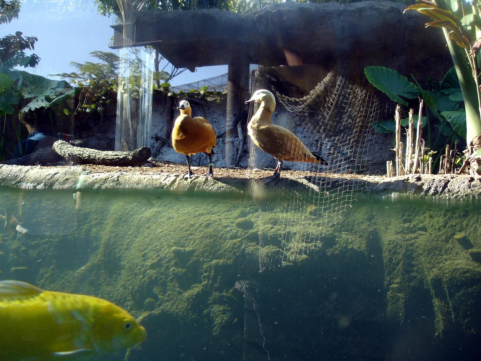 Under Water, Birds, Bspo06, Fish, Underwater, HQ Photo