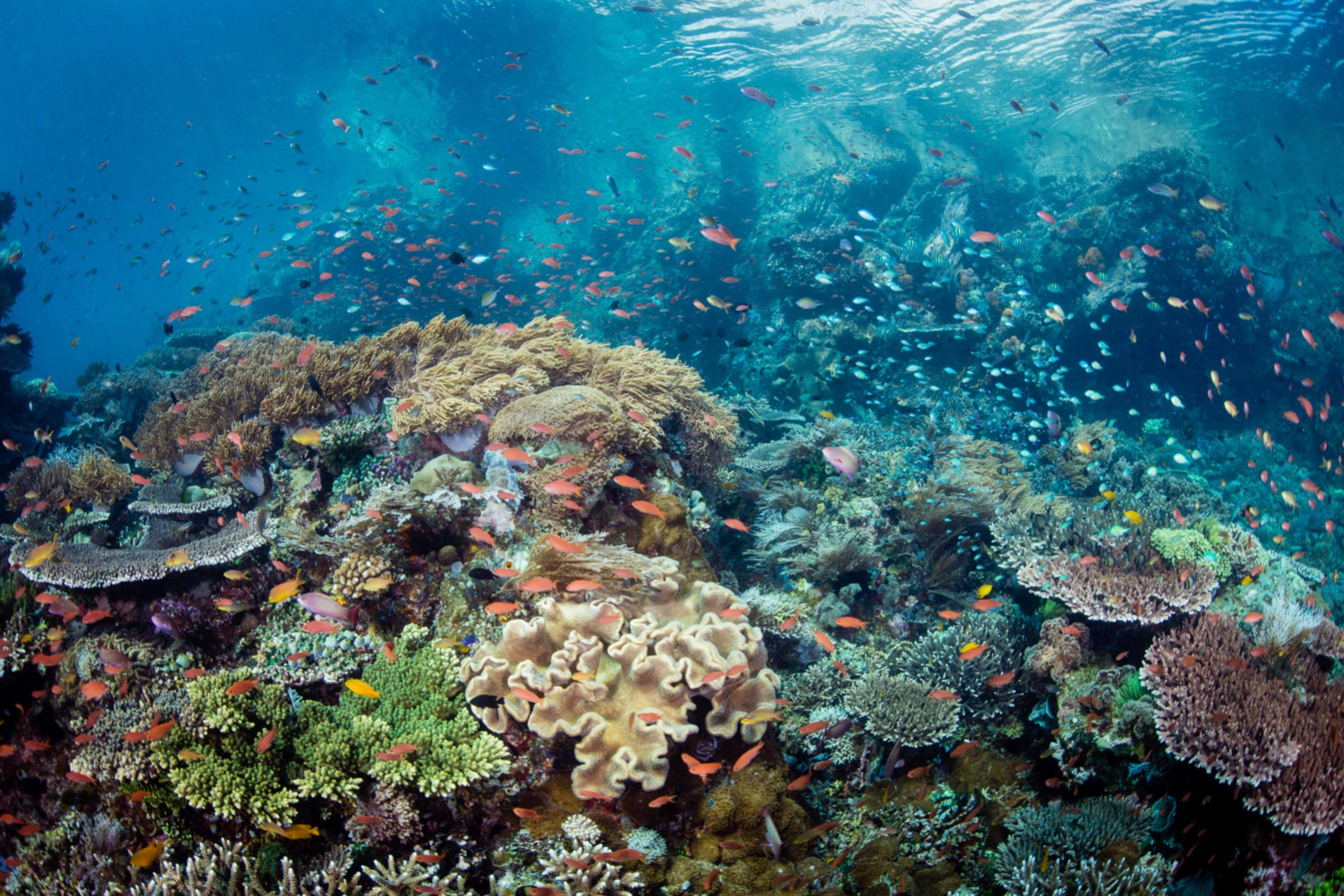 Underwater Tribe | Dive Bali and Indonesia with UW Photography ...