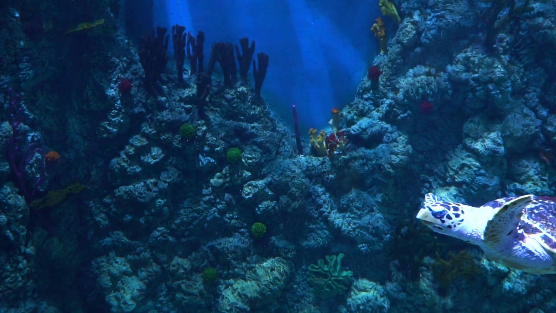 A beautiful turtle swims in slow motion. Beautiful underwater world ...