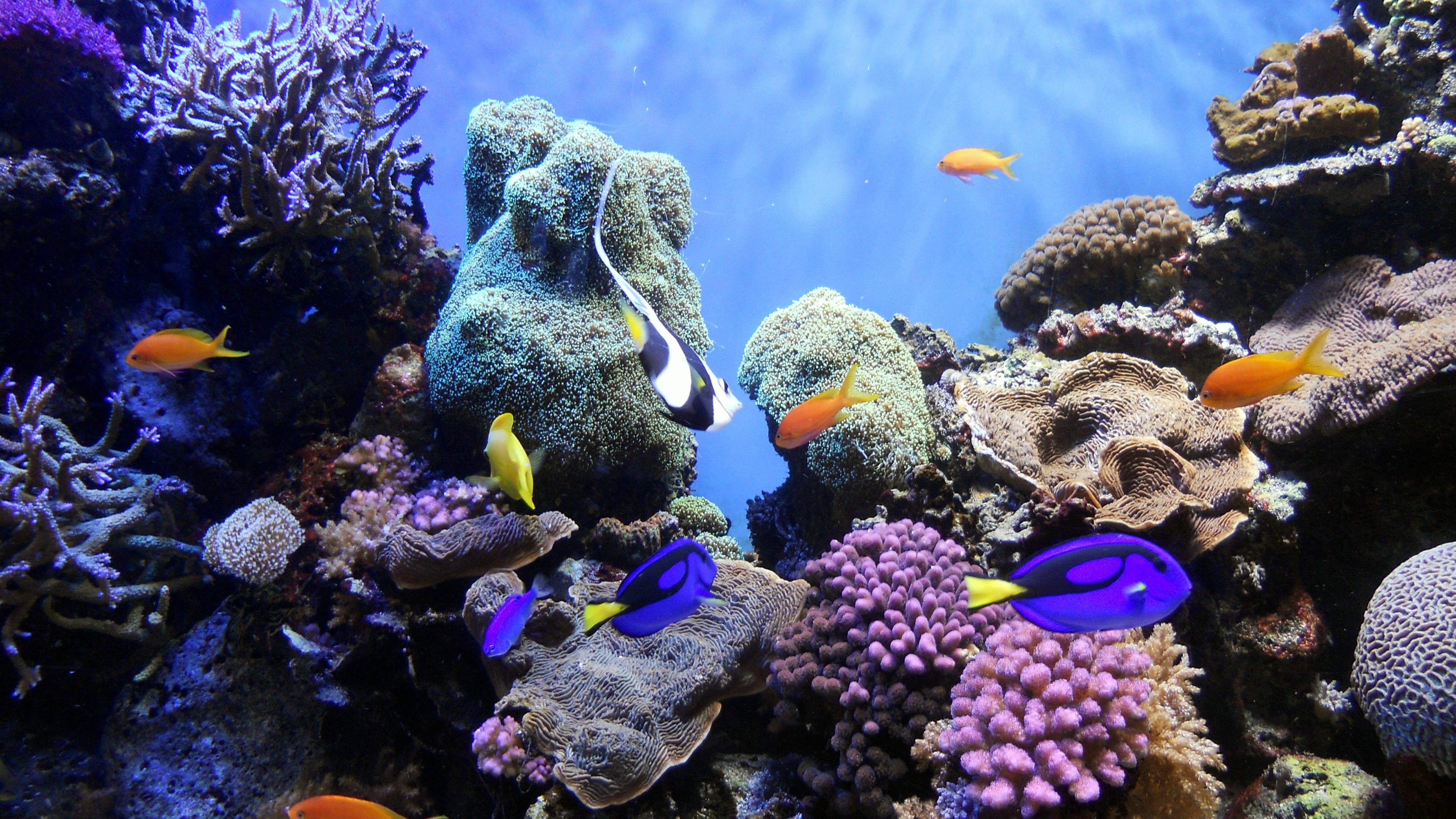 File:Underwater World.jpg - Wikimedia Commons