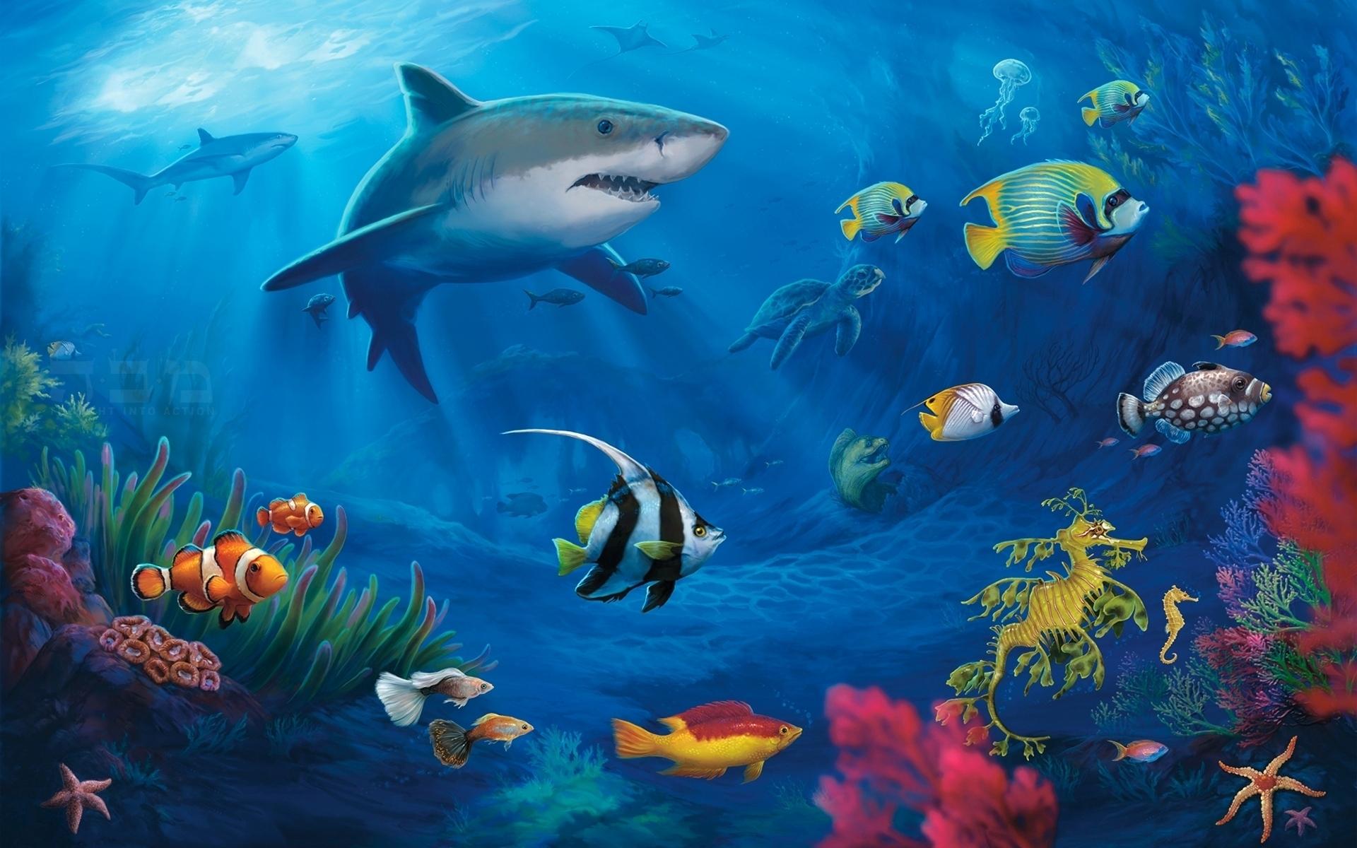 Best Photography Wallpaper: Underwater World, 508820, Photography