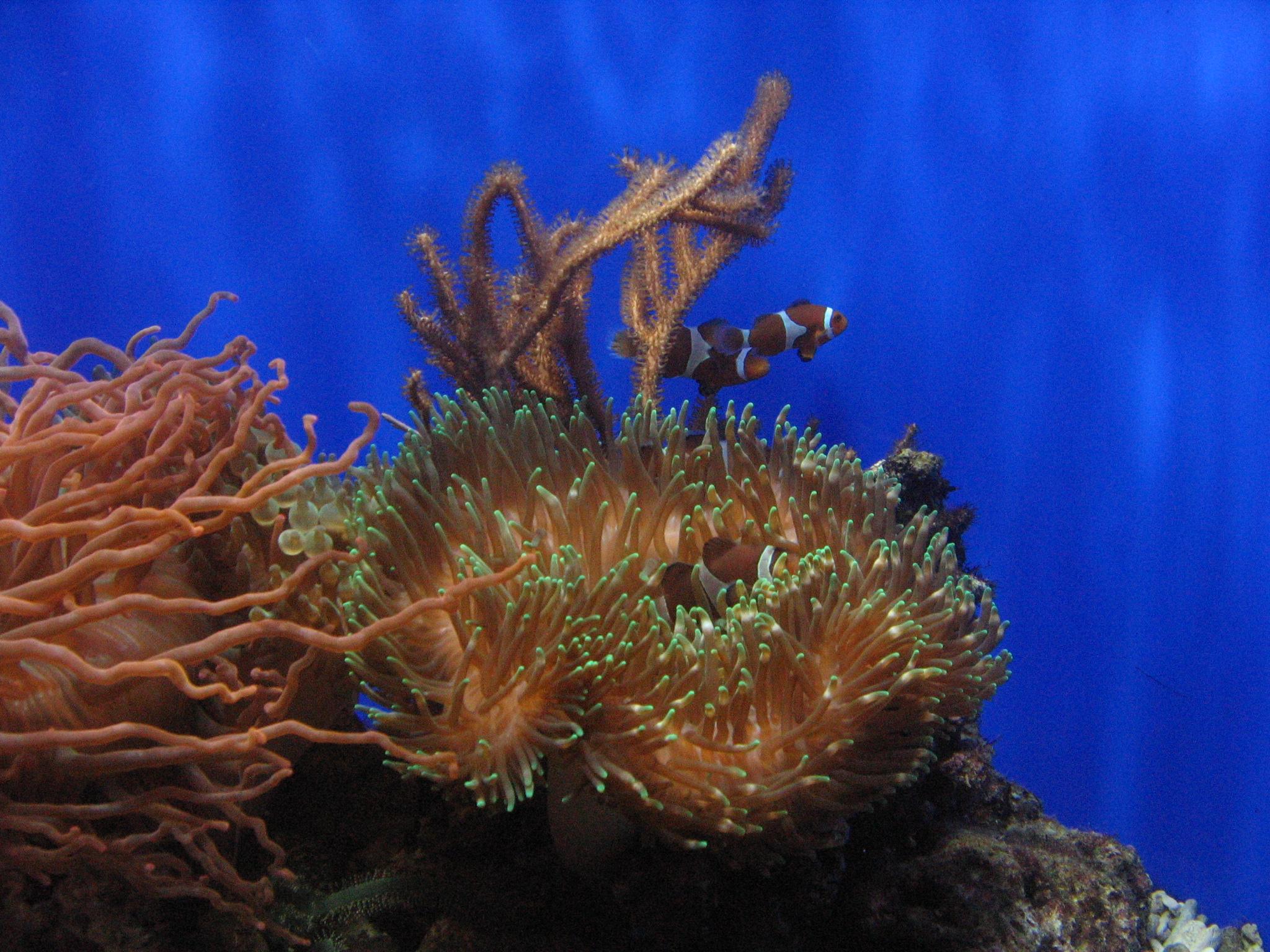 Underwater World, Bspo06, Clown, Coral, Fish, HQ Photo