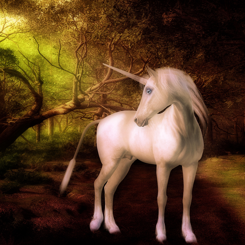 Unicorn, Creatures, Cute, Digitalart, Fantasy, HQ Photo