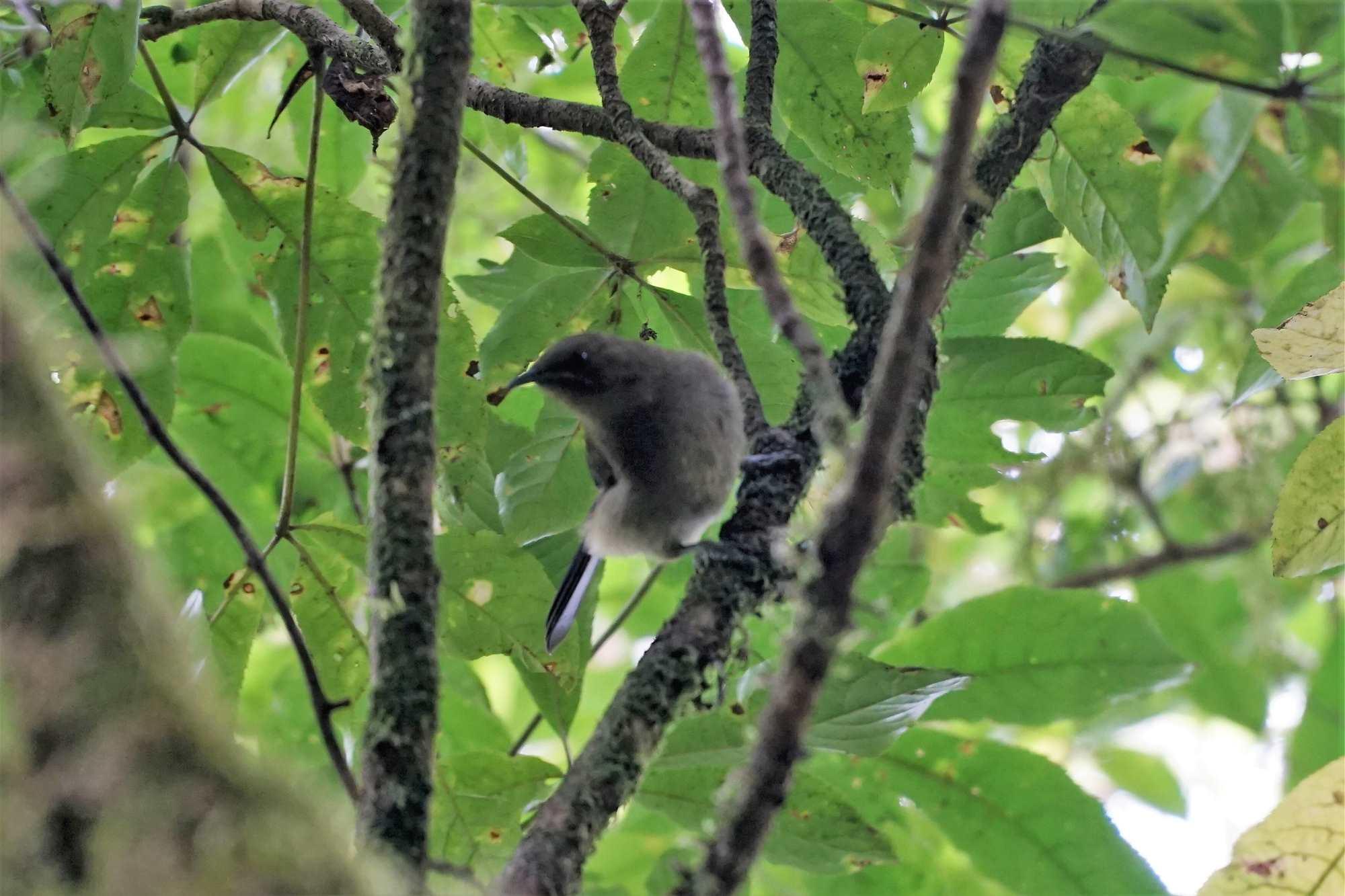 Unknown bird photo