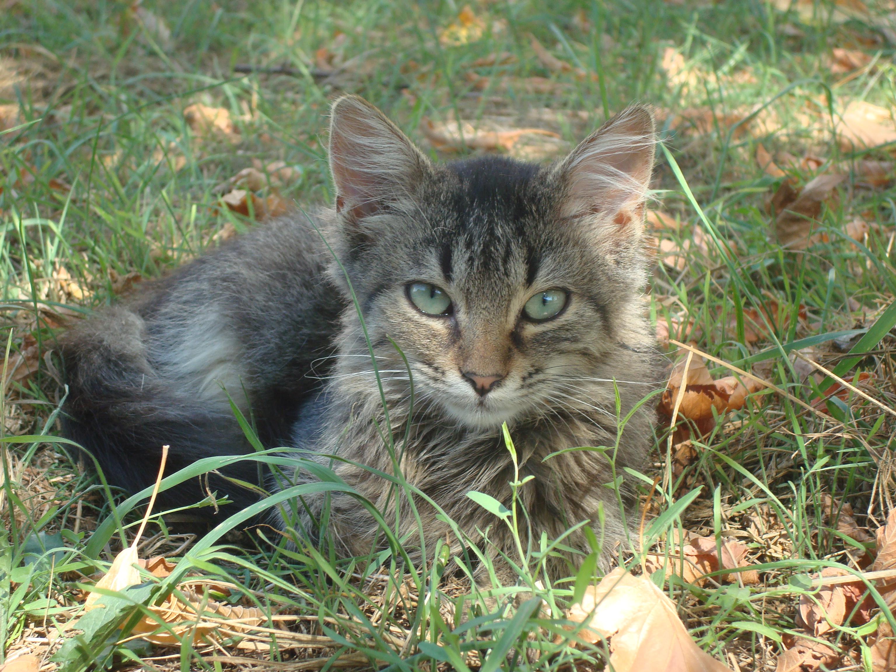 Urban cat photo