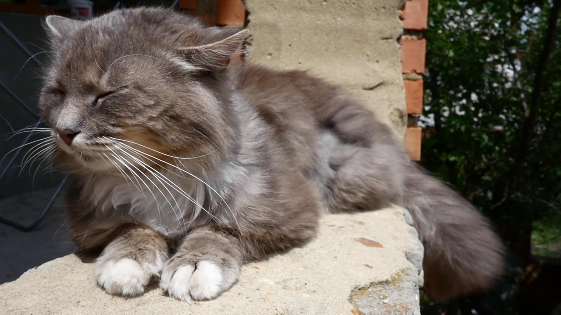 Urban cat resting photo