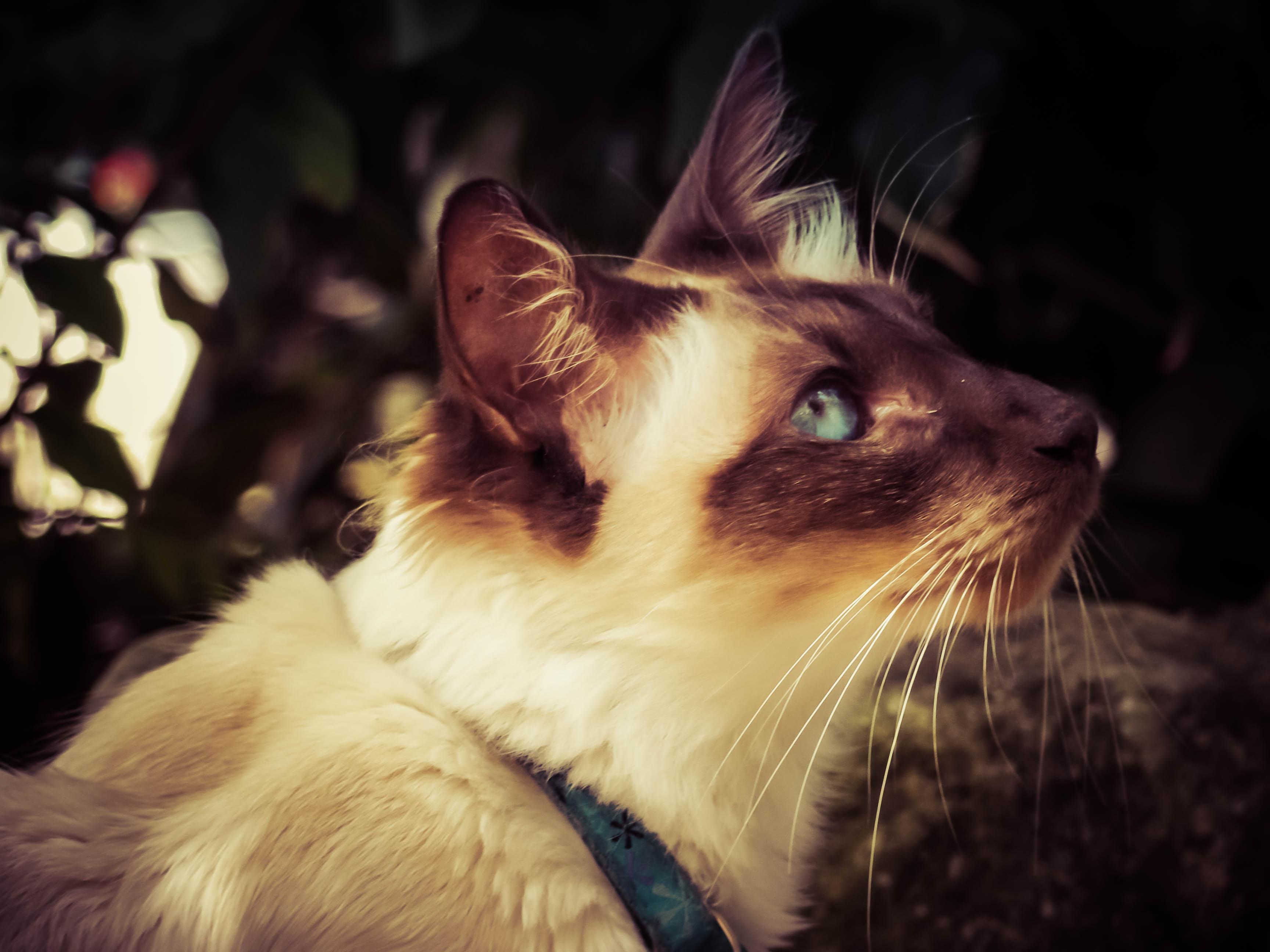 I'm pretty and I know it - Urban Cat