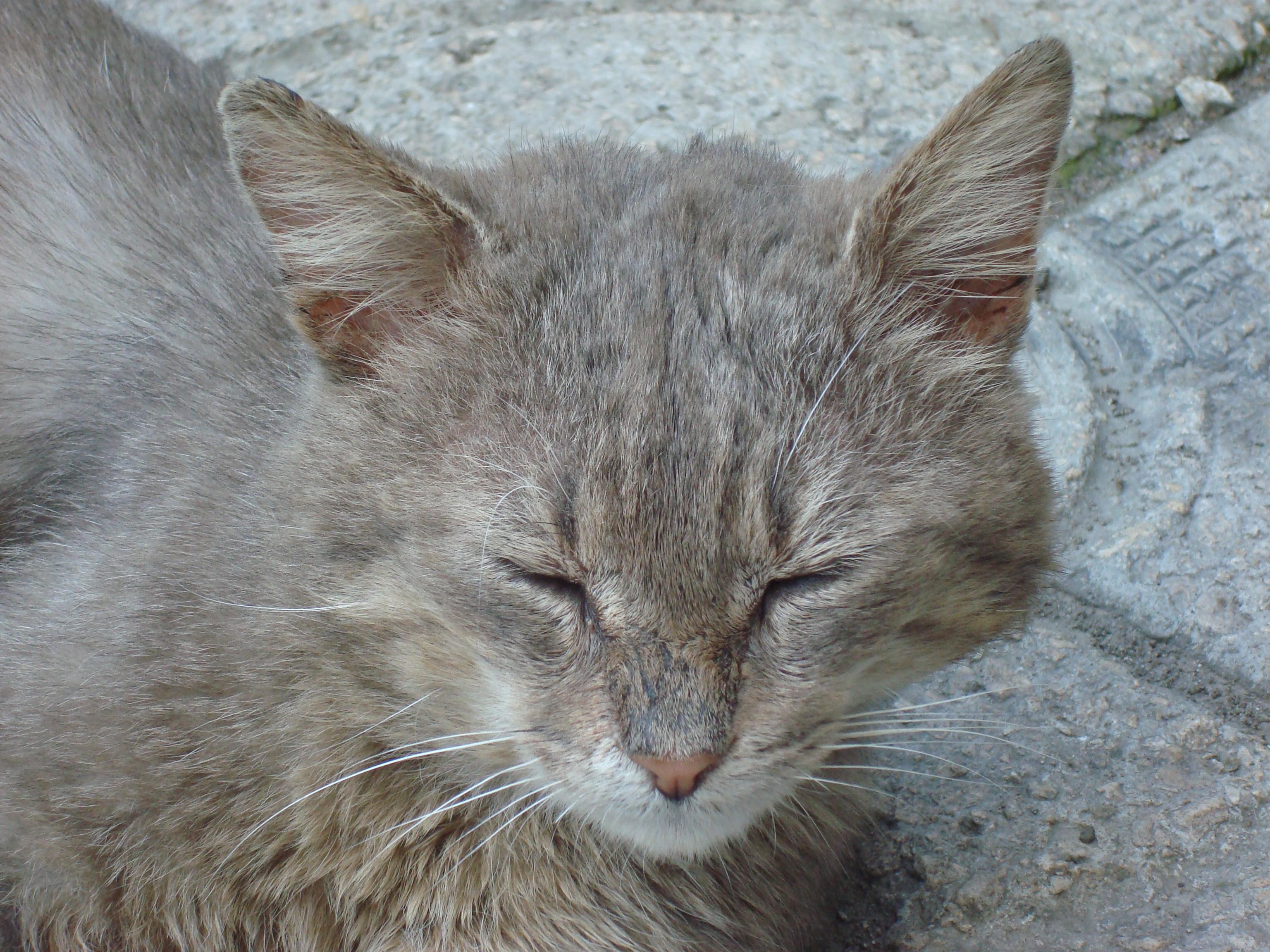 Urban cat sleeping, Aminal, Cat, Ears, Feline, HQ Photo