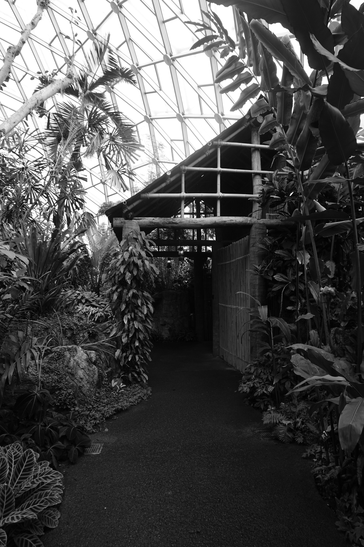Variety of Plants Grayscale Photo, Leaves, Nipa hut, Pathway, Plants, HQ Photo