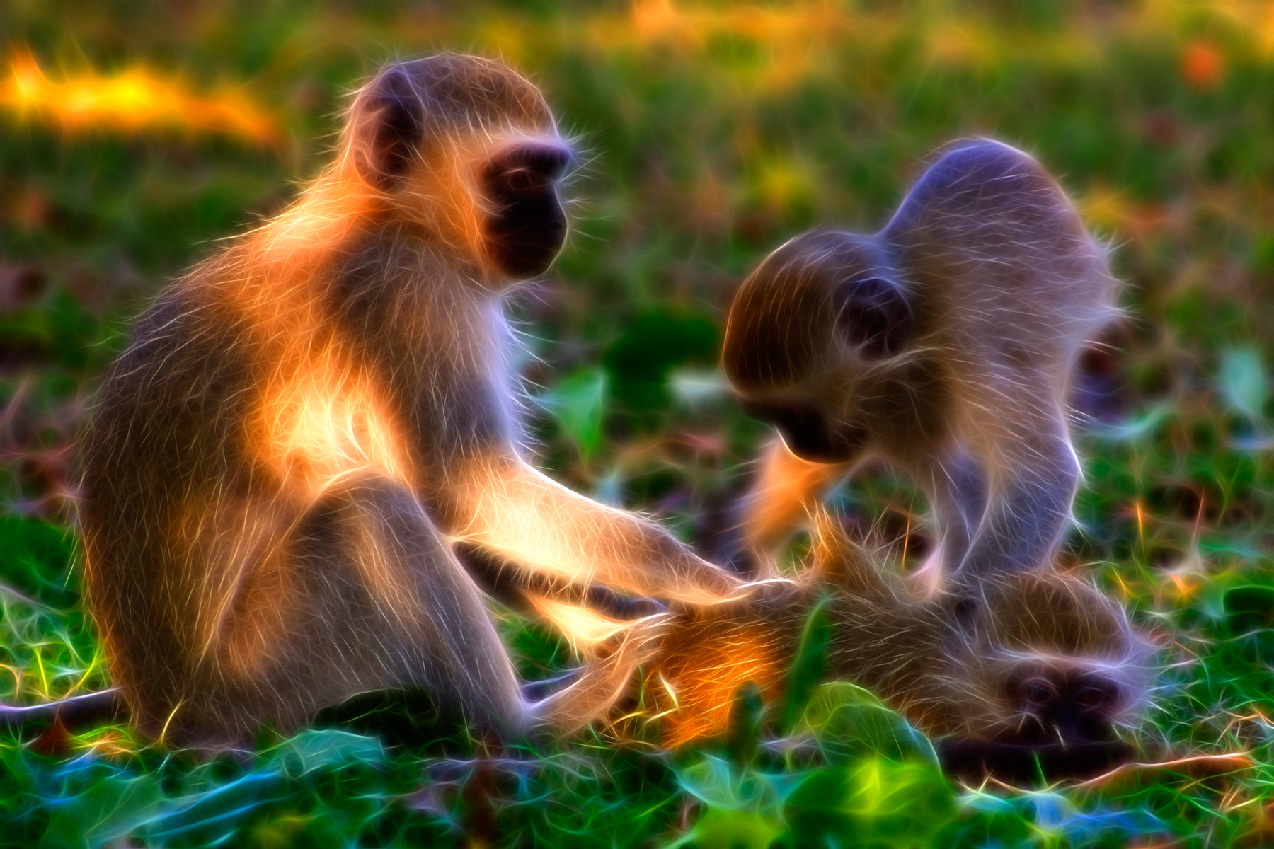 Vervet Monkeys Abstract, Abstract, Play, Monkey, Monkeys, HQ Photo
