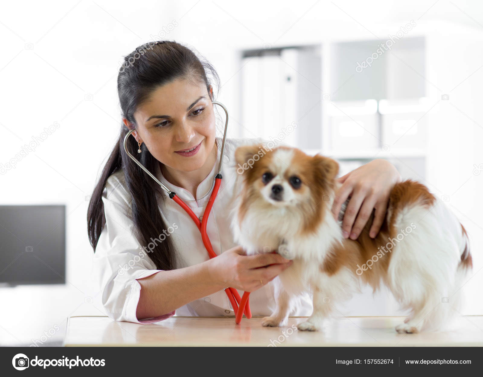 Cute young female veterinarian doctor using stethoscope listening to ...
