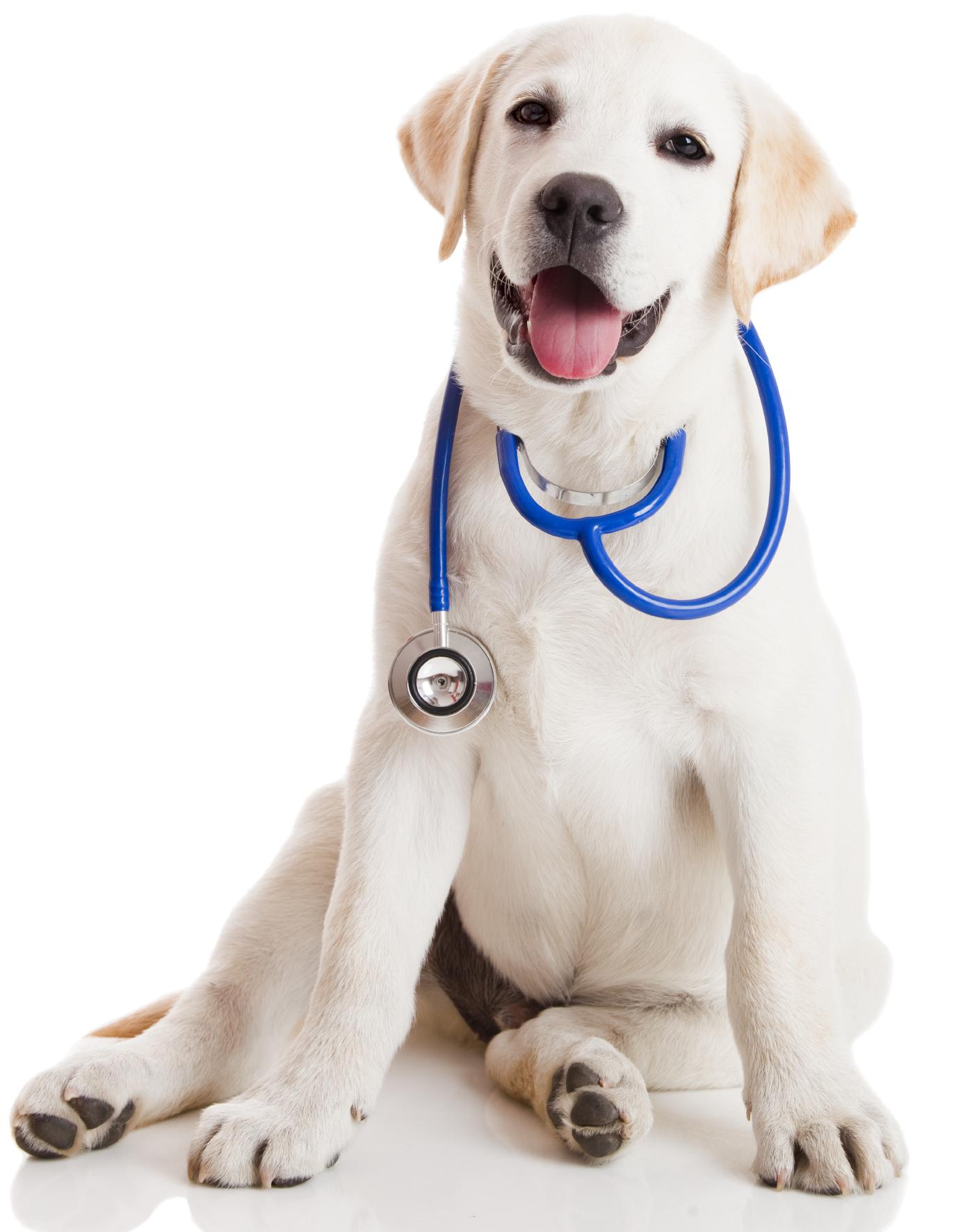 Kinard's Creekside Animal Hospital - Veterinarian in Murfreesboro, TN
