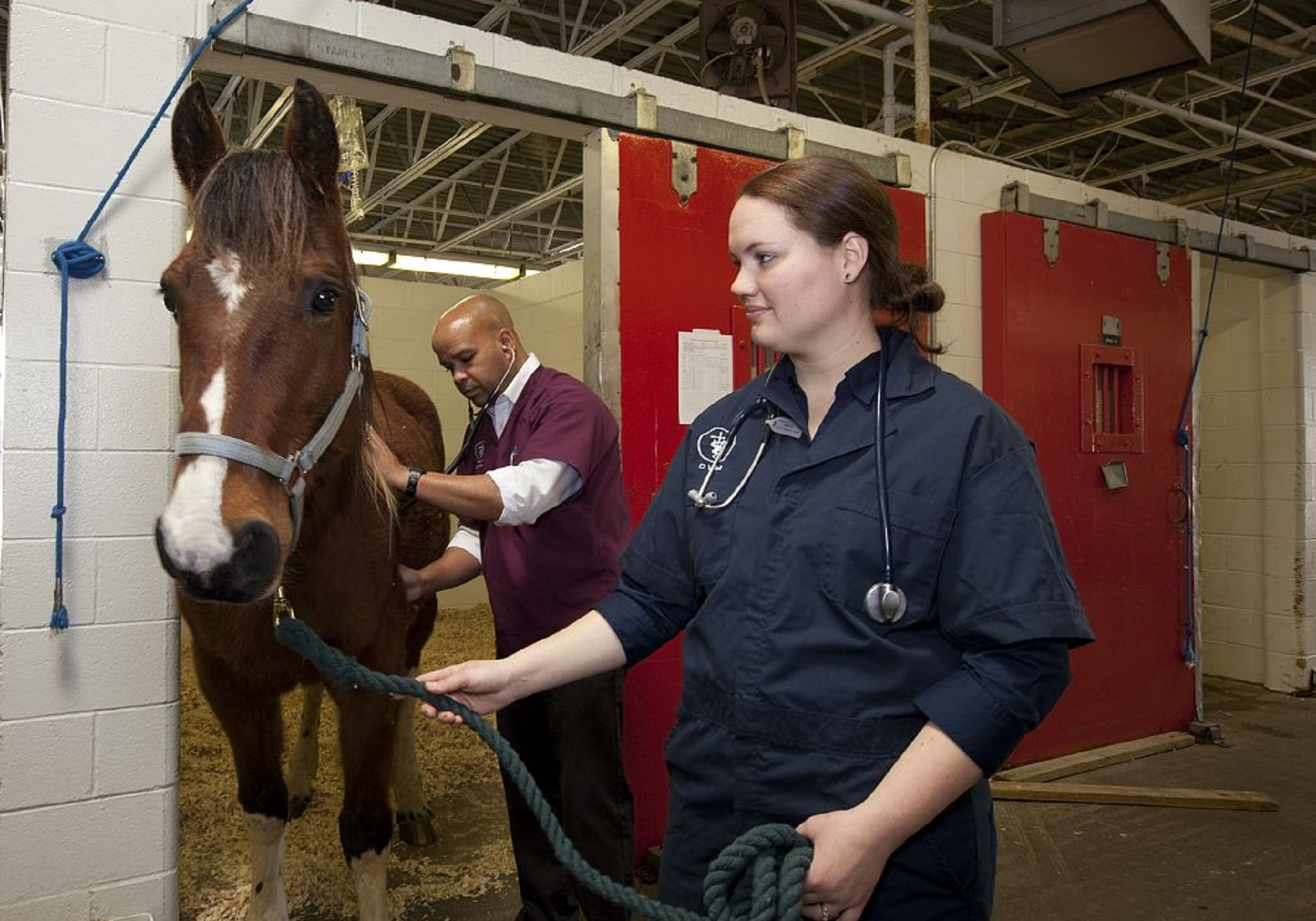Veterinarian Doctor, Human, Nature, Stable, Horse, HQ Photo