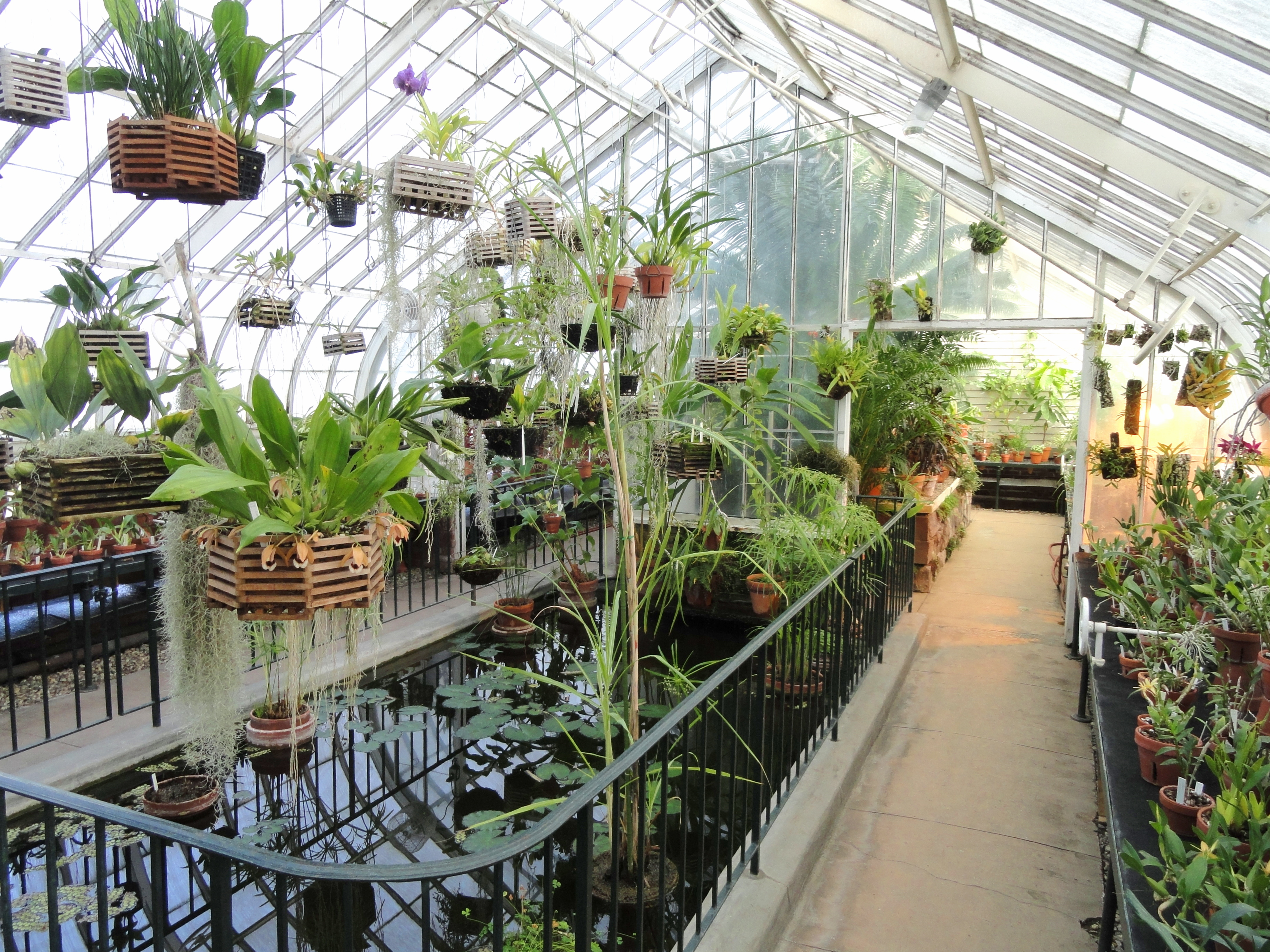 File:Interior view - Talcott Greenhouse - Mount Holyoke College ...
